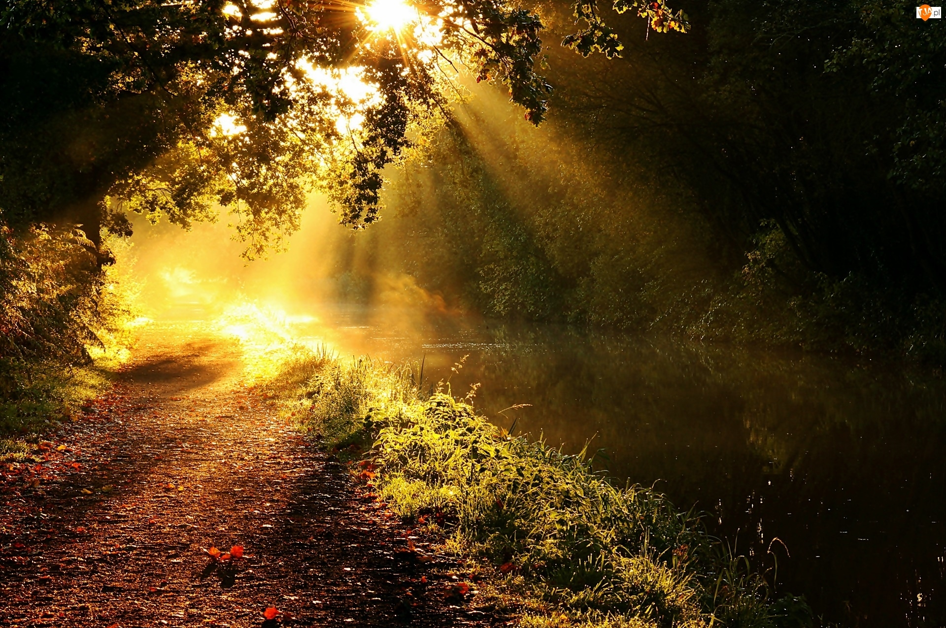 Słońca, Las, Droga, Rzeka, Promienie