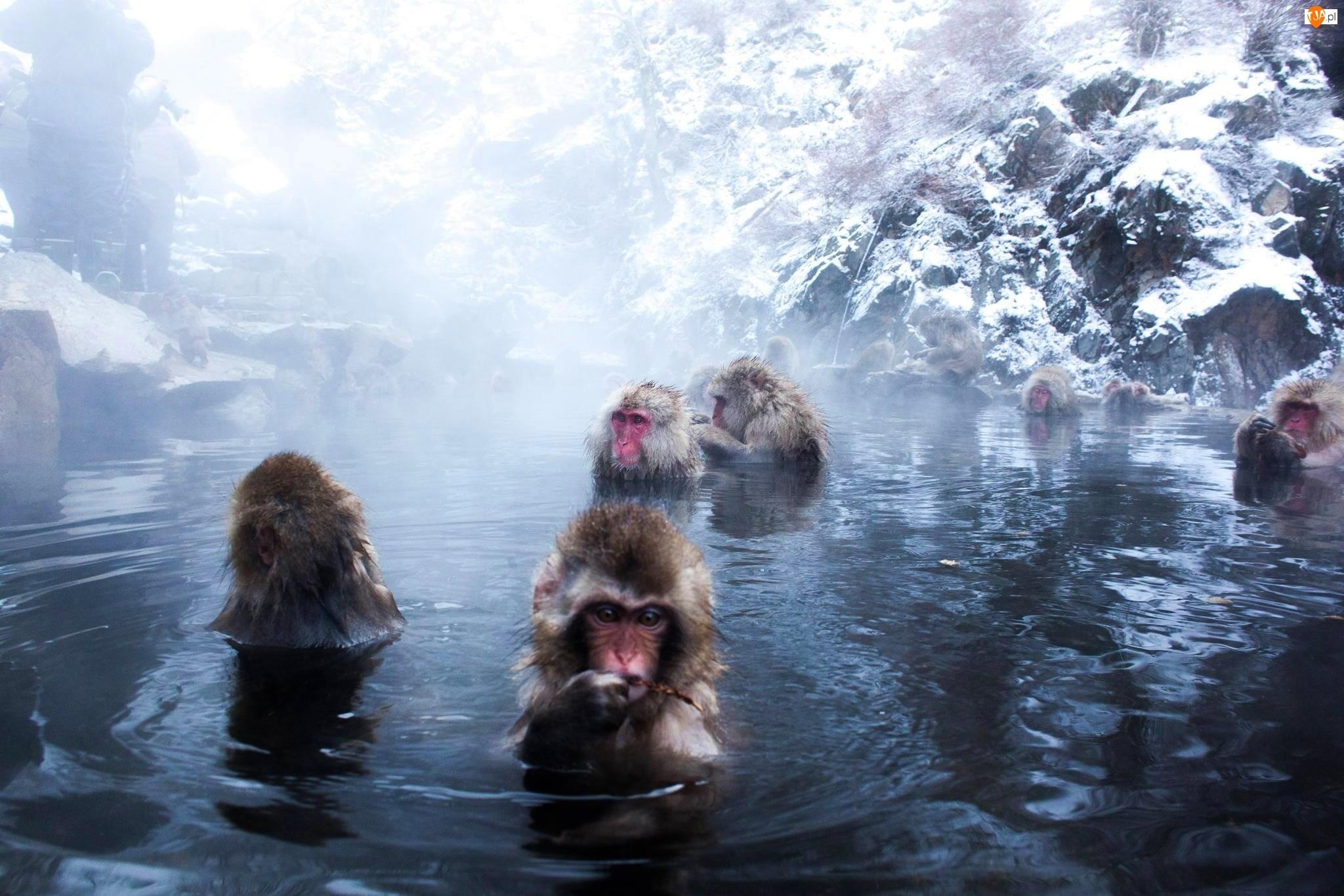 Małpki, Skały, Kąpiel, Woda