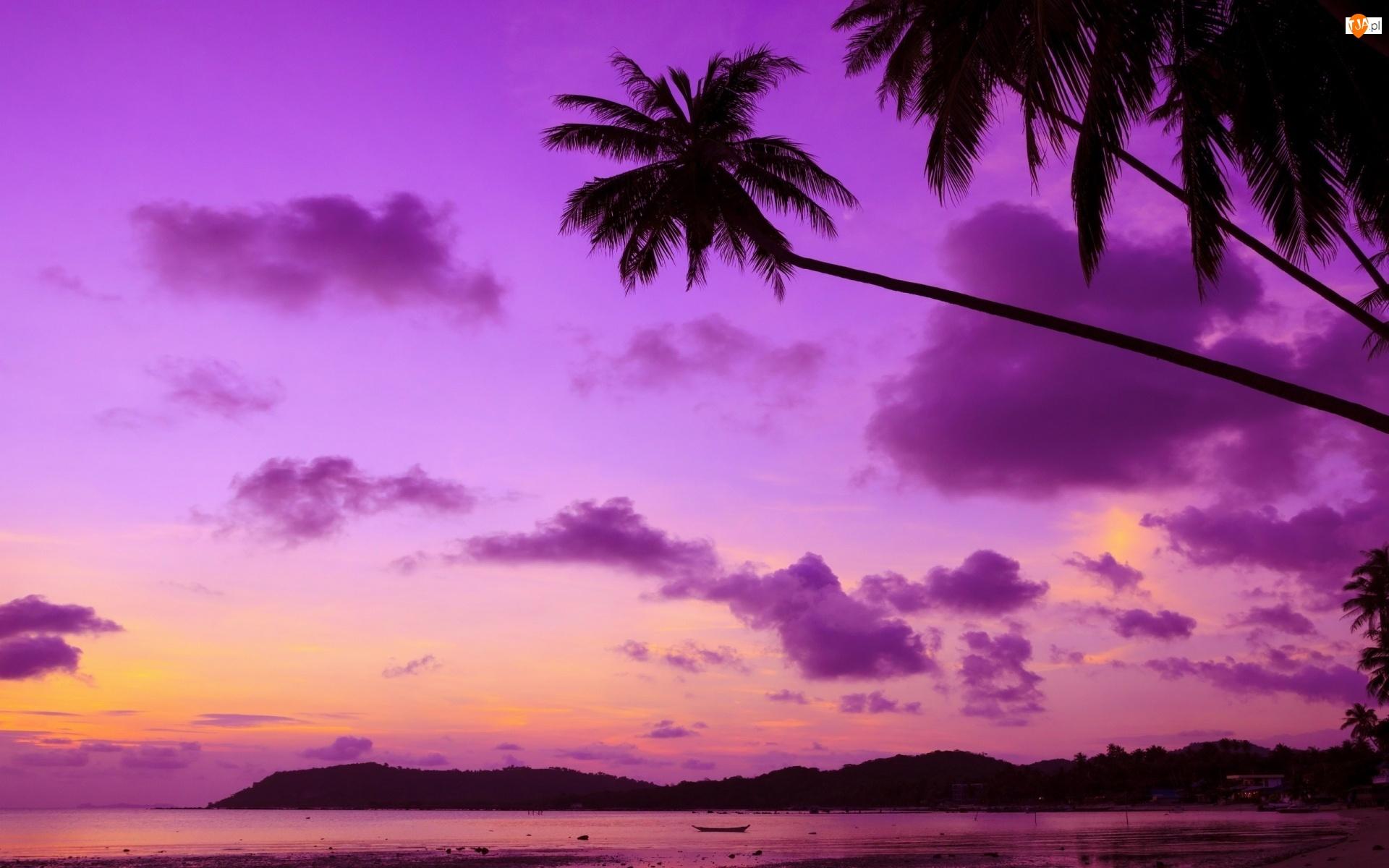 Palmy, Wybrzeże