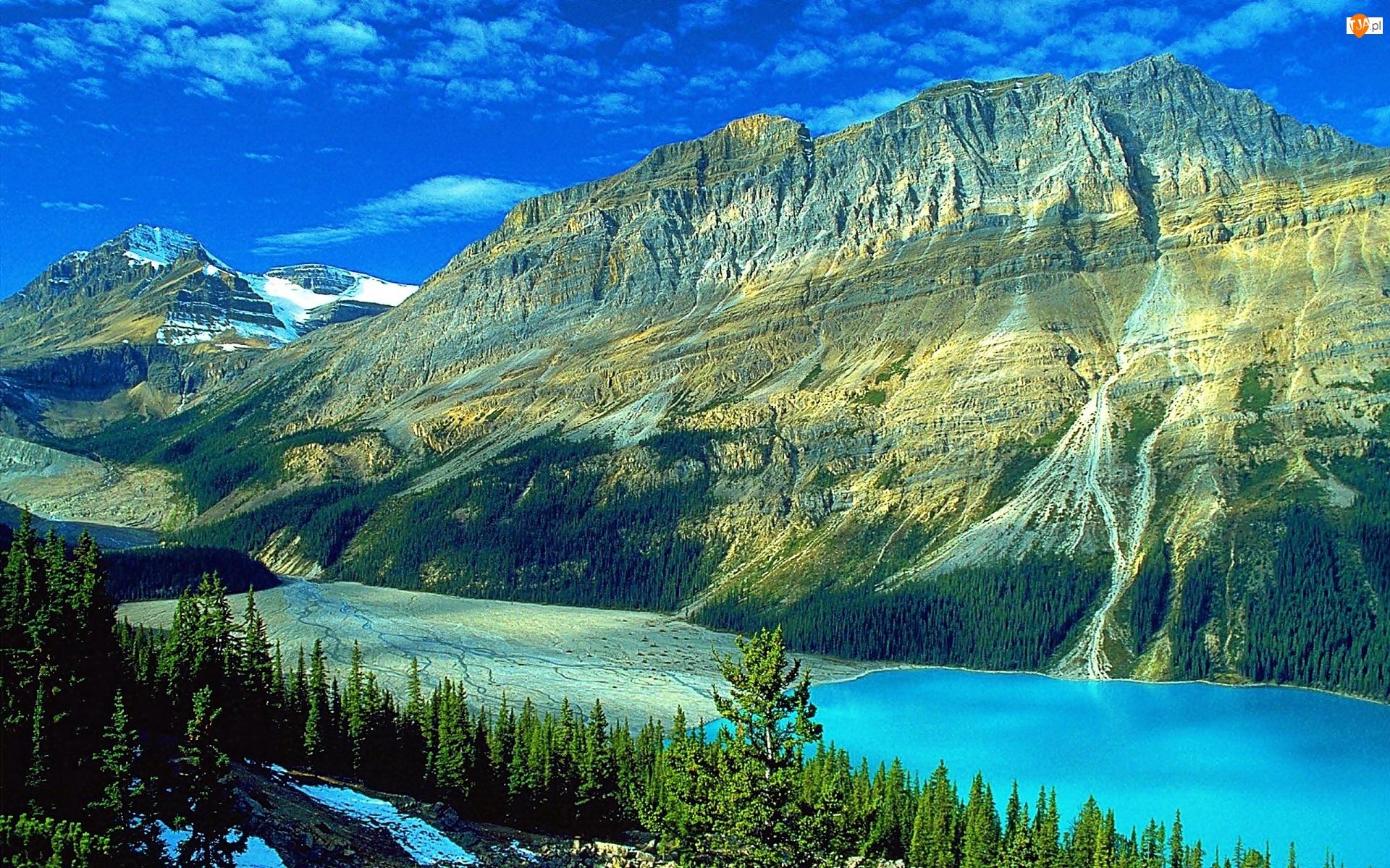 Lato, Lasy, Kanada, Jezioro Peyto Lake, Park Narodowy Banff, Góry