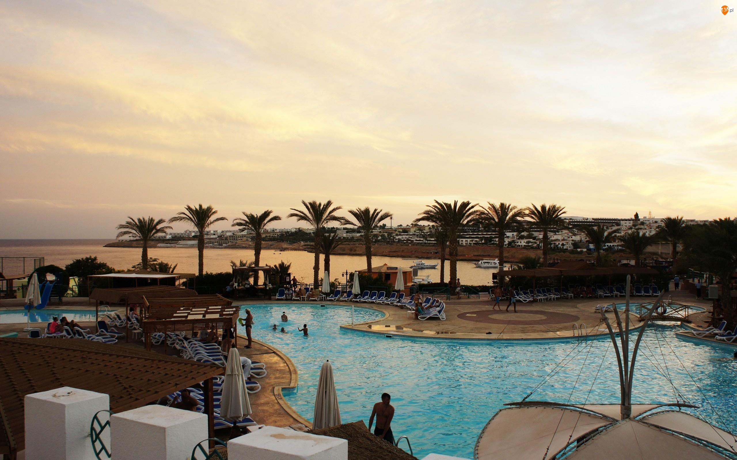 Hotel, Palmy, Wybrzeże, Kurort, Basen, Ludzie