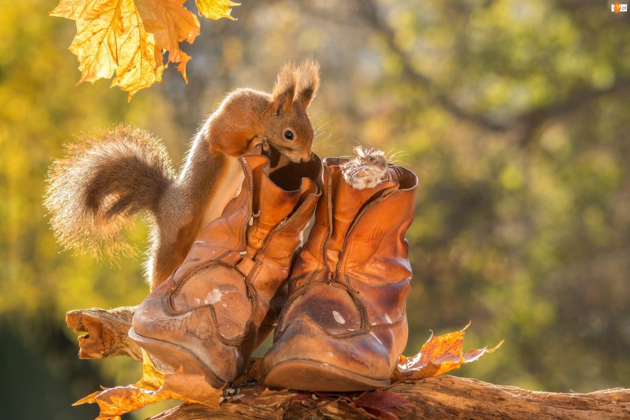 Myszka, Jesień, Buty, Wiewiórka, Mała