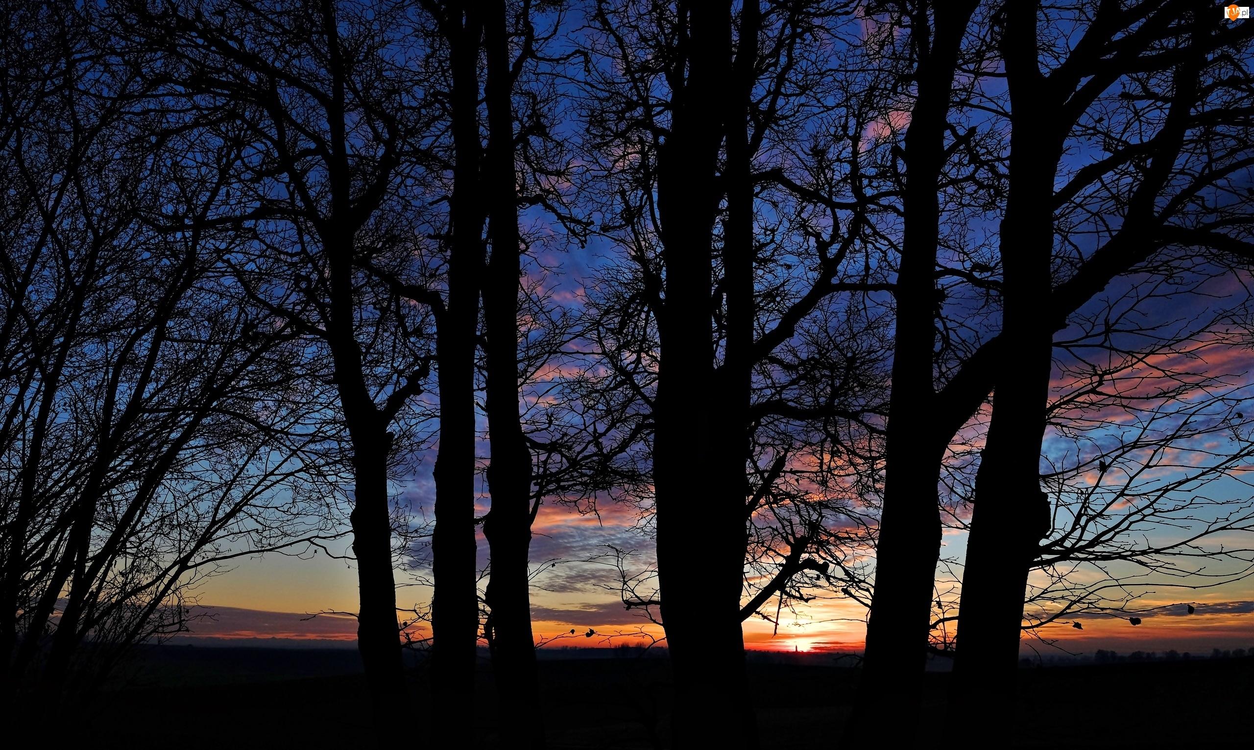 Wieczór, Drzewa, Chmury