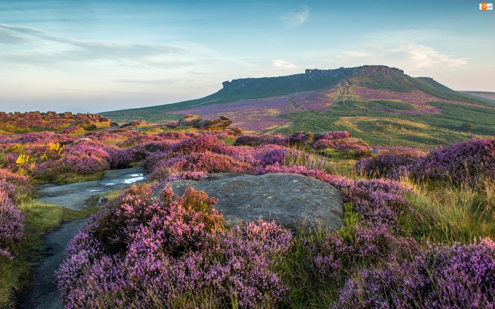 Wzgórza, Wrzosy, Anglia, Wrzosowisko, Park Narodowy Peak District, Skały