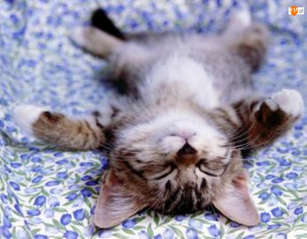 Kotek, Plecach, Śpiący, Na