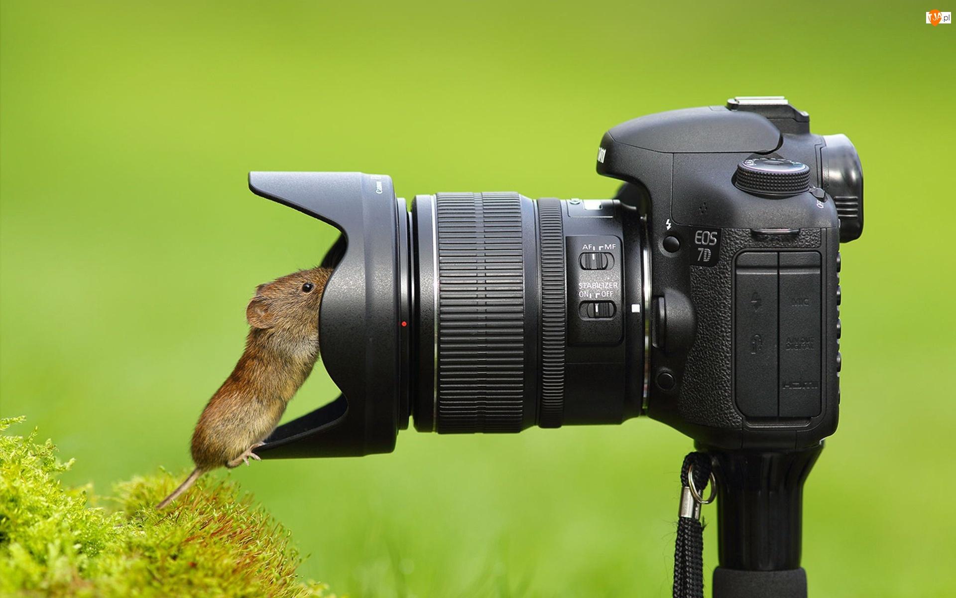 Myszka, Krzew, Aparat, Fotograficzny