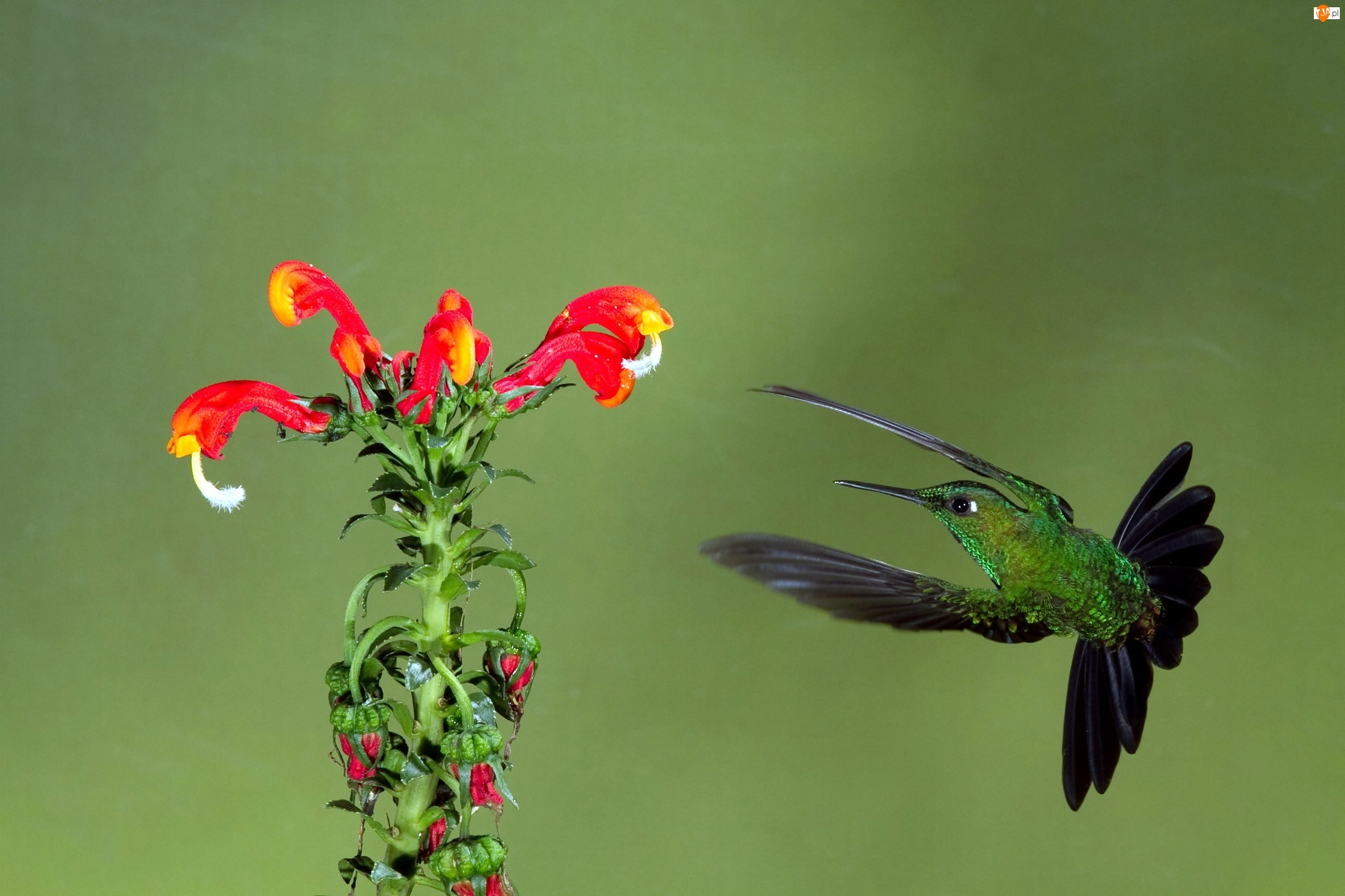 Ptak, Kwiat