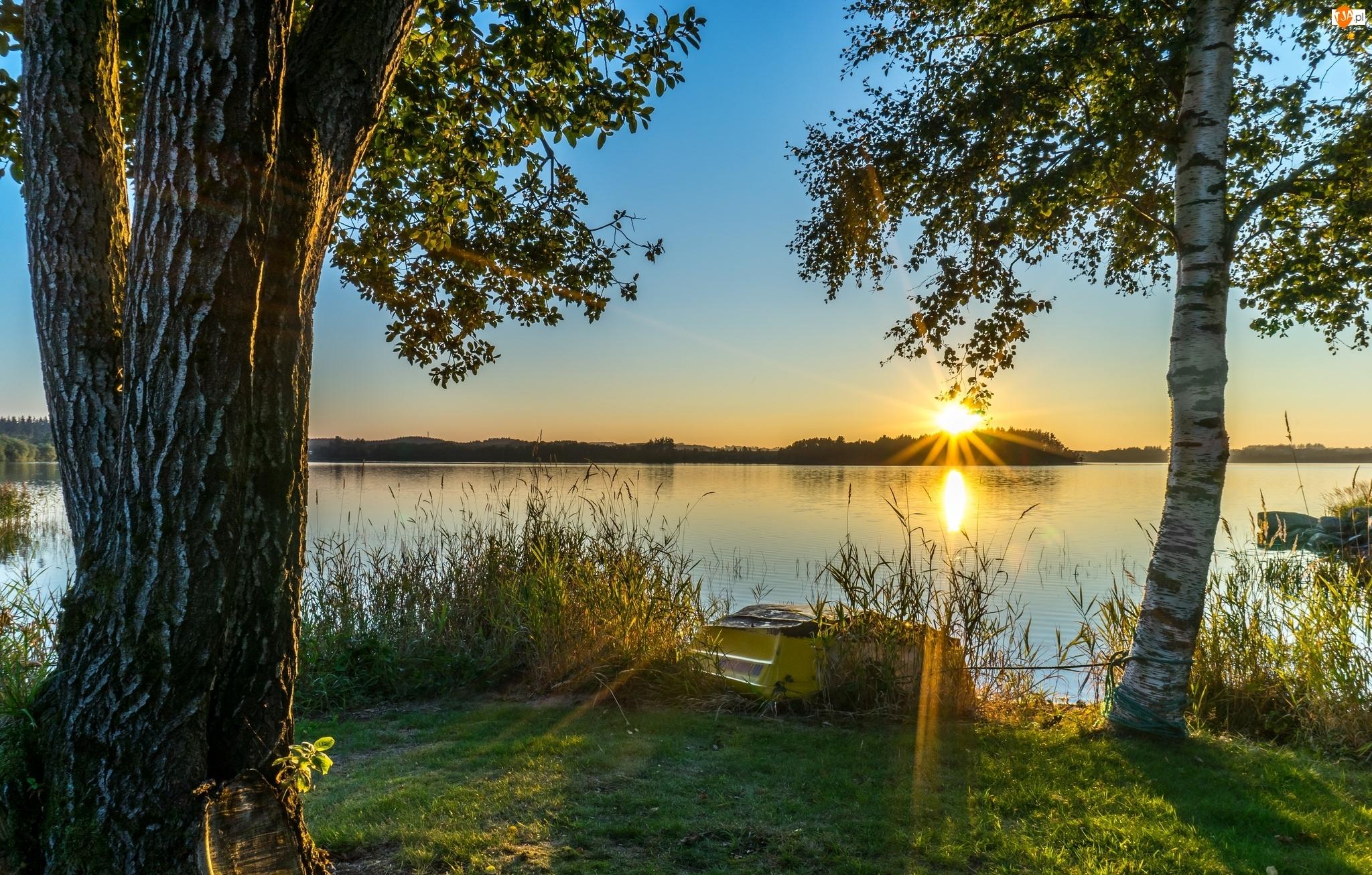 Wschód słońca, Brzoza, Jezioro, Łódka, Brzeg, Drzewa