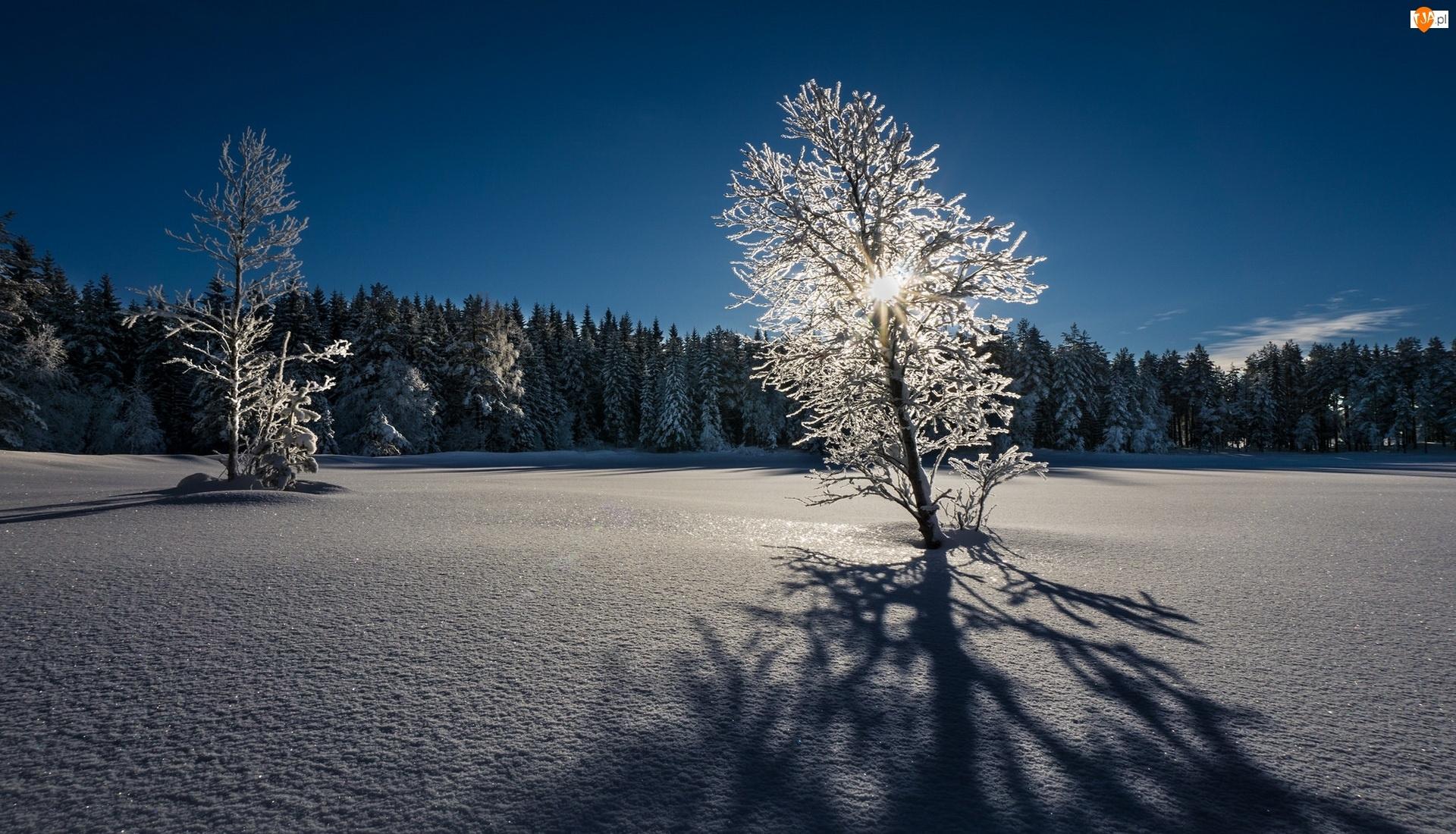 Zima, Wschód słońca, Śnieg, Drzewa