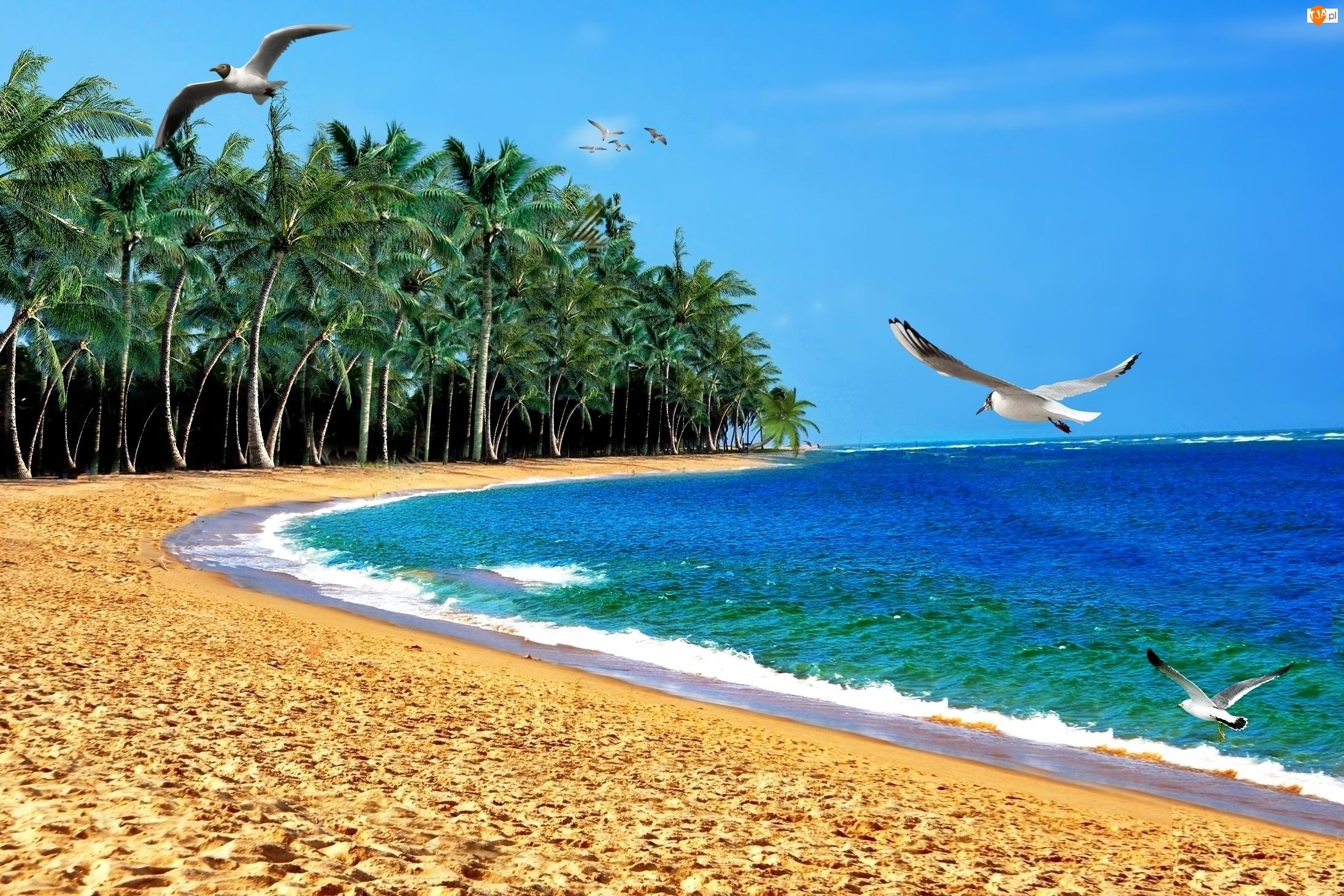 Mewy, Palmy, Plaża, Morze