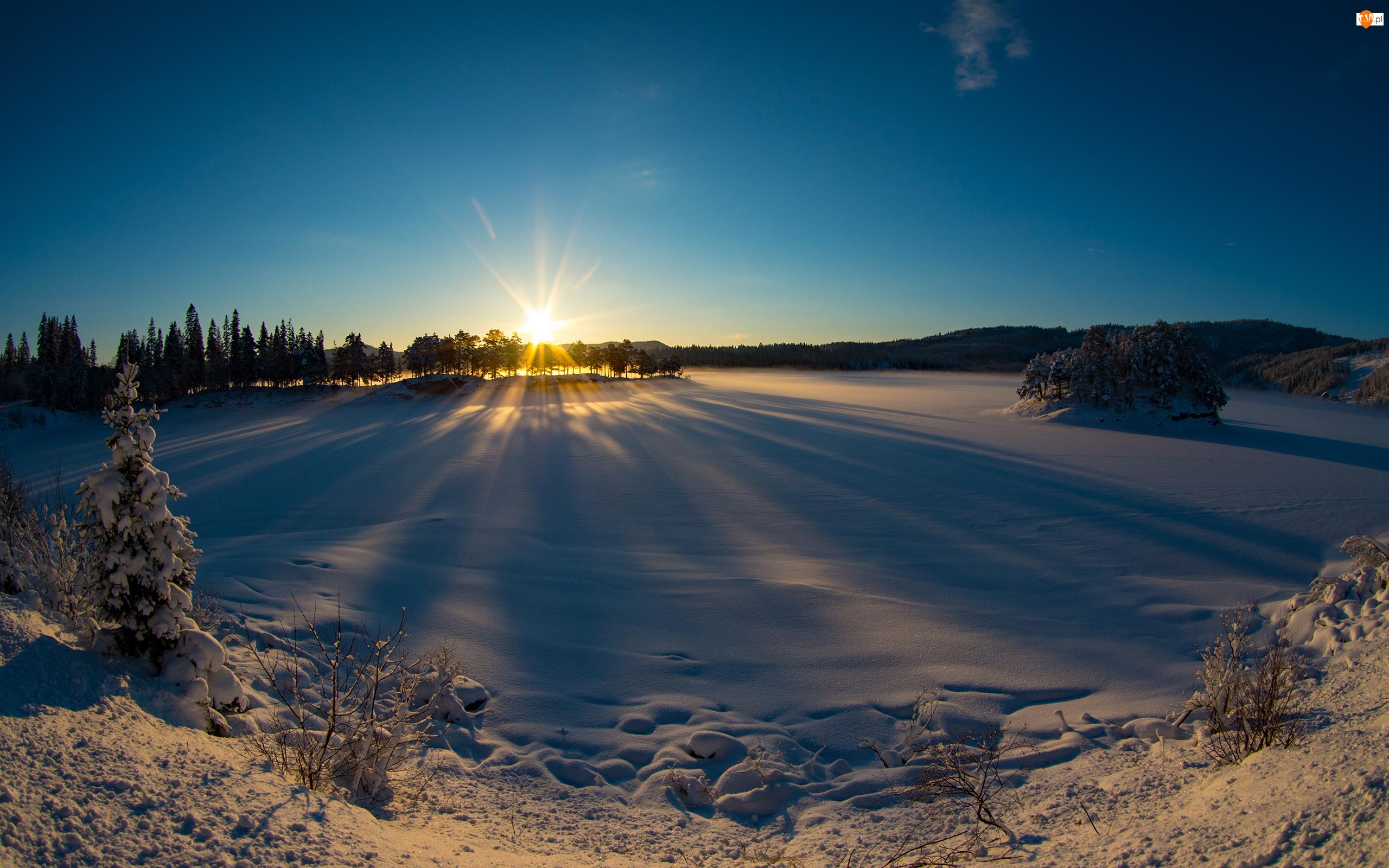 Zima, Promienie słońca, Śnieg, Drzewa