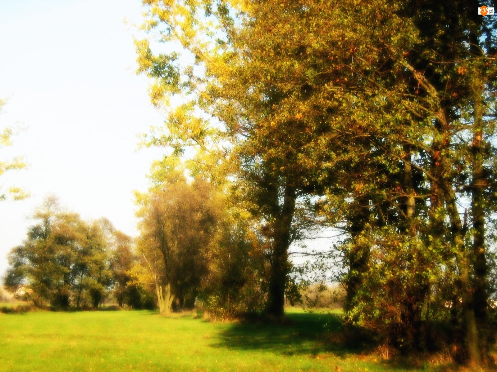łąka, Jesień, Drzewo