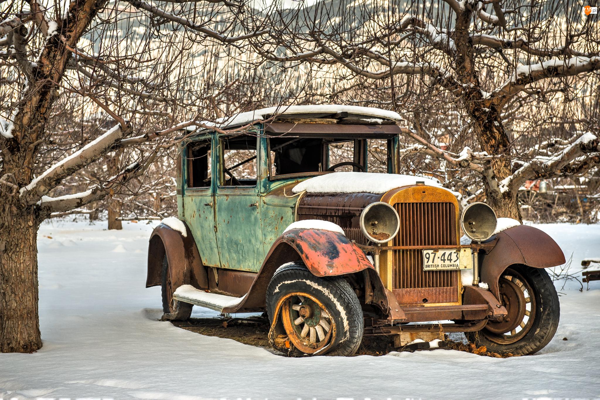 Samochód, Drzewa, Wrak, Śnieg, Stary, Zima
