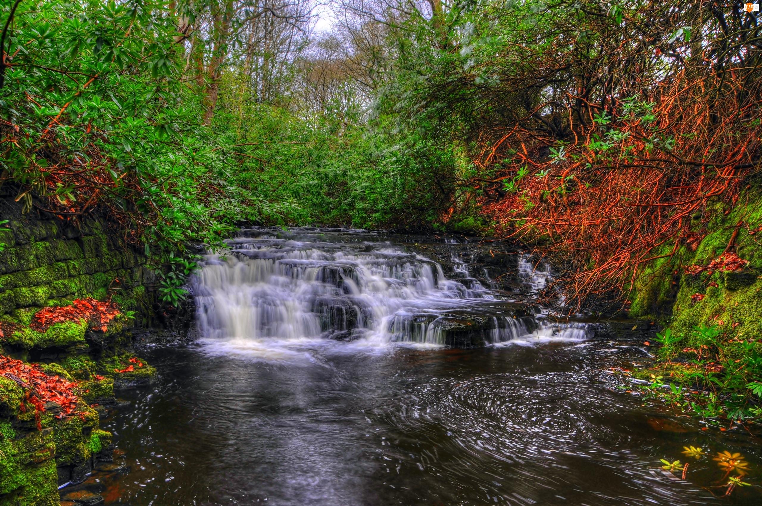 Wodospad, Drzewa, Anglia, Krzewy, Hrabstwo Lancashire, Kaskada