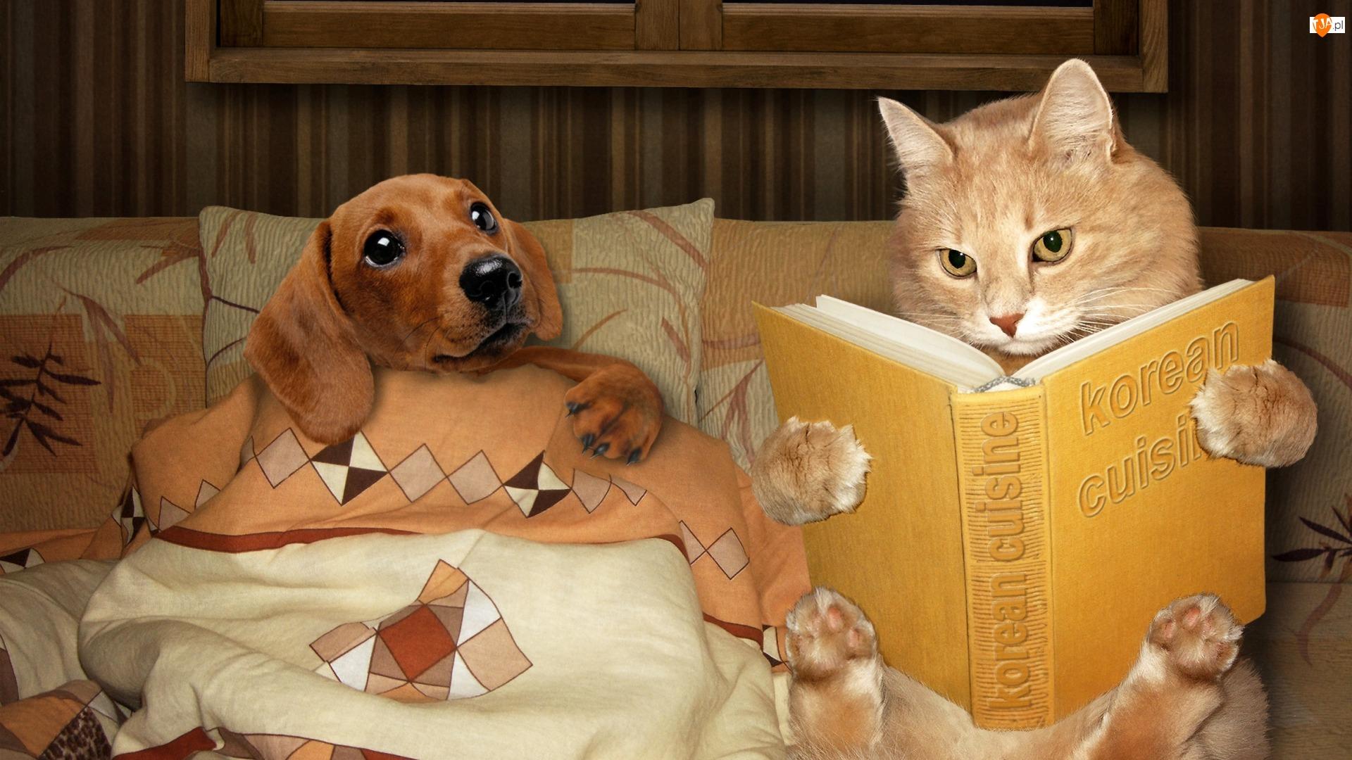 Pies, Śmieszne, Kot, Książka