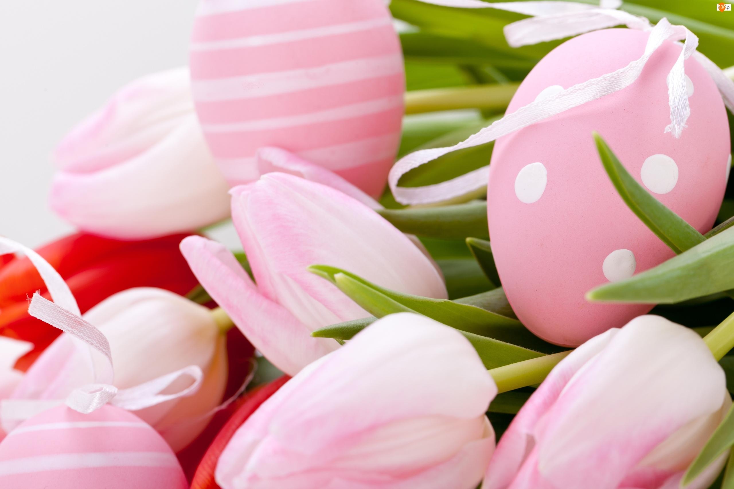Tulipany, Wielkanoc, Jajka, Pisanki