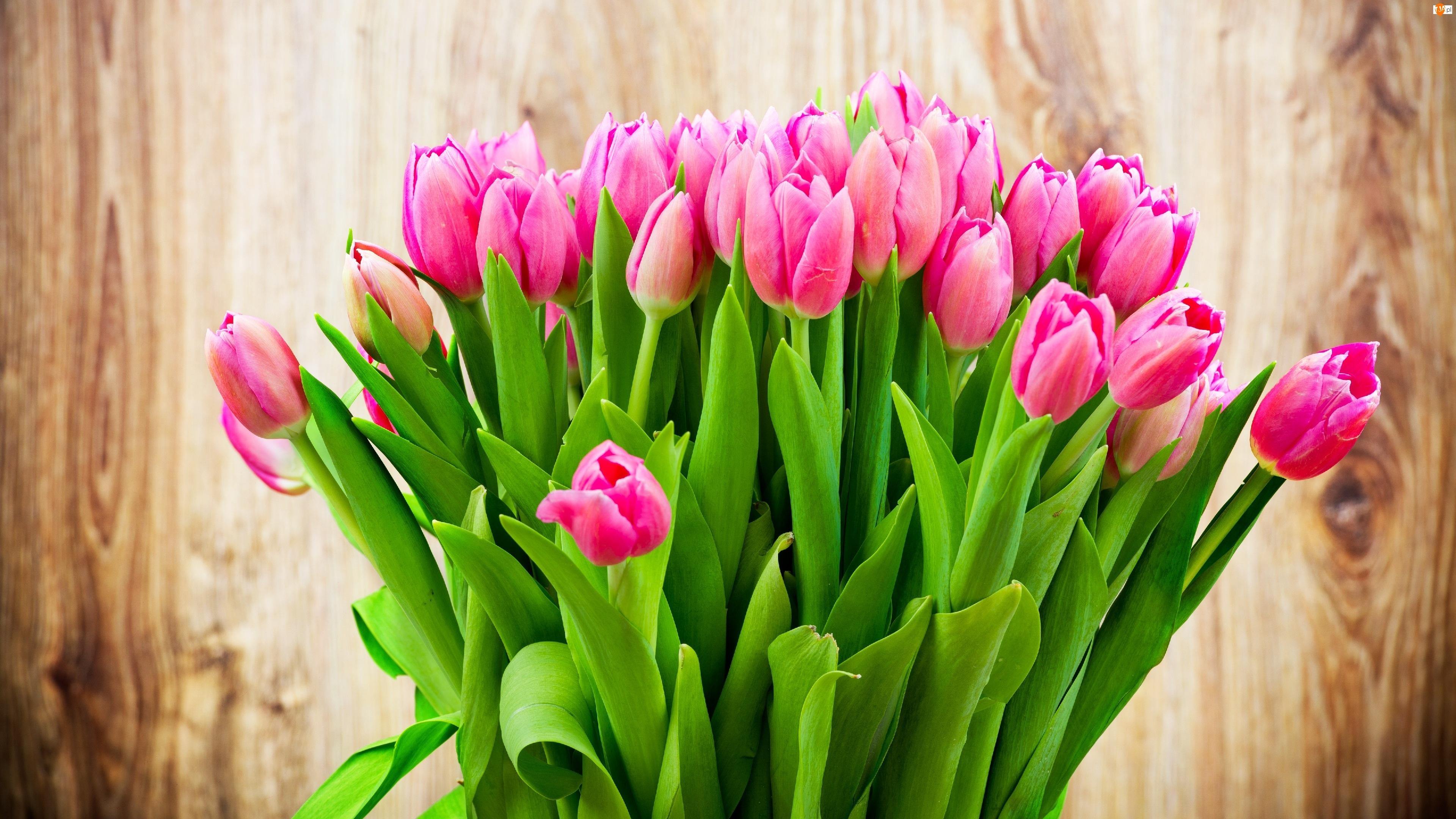 Różowe, Bukiet, Tulipany