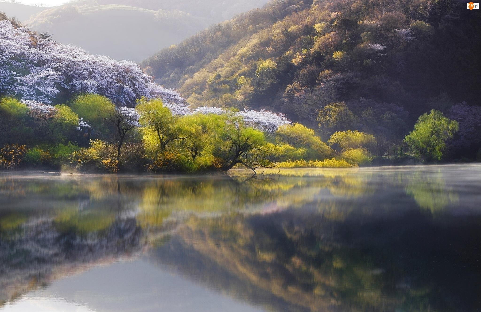 Wiosna, Drzewa, Jezioro, Las