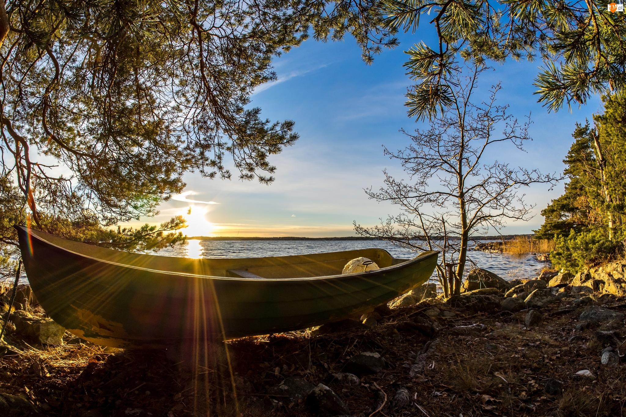 Łódka, Drzewa, Szwecja, Morze, Värmdö, Promienie słońca