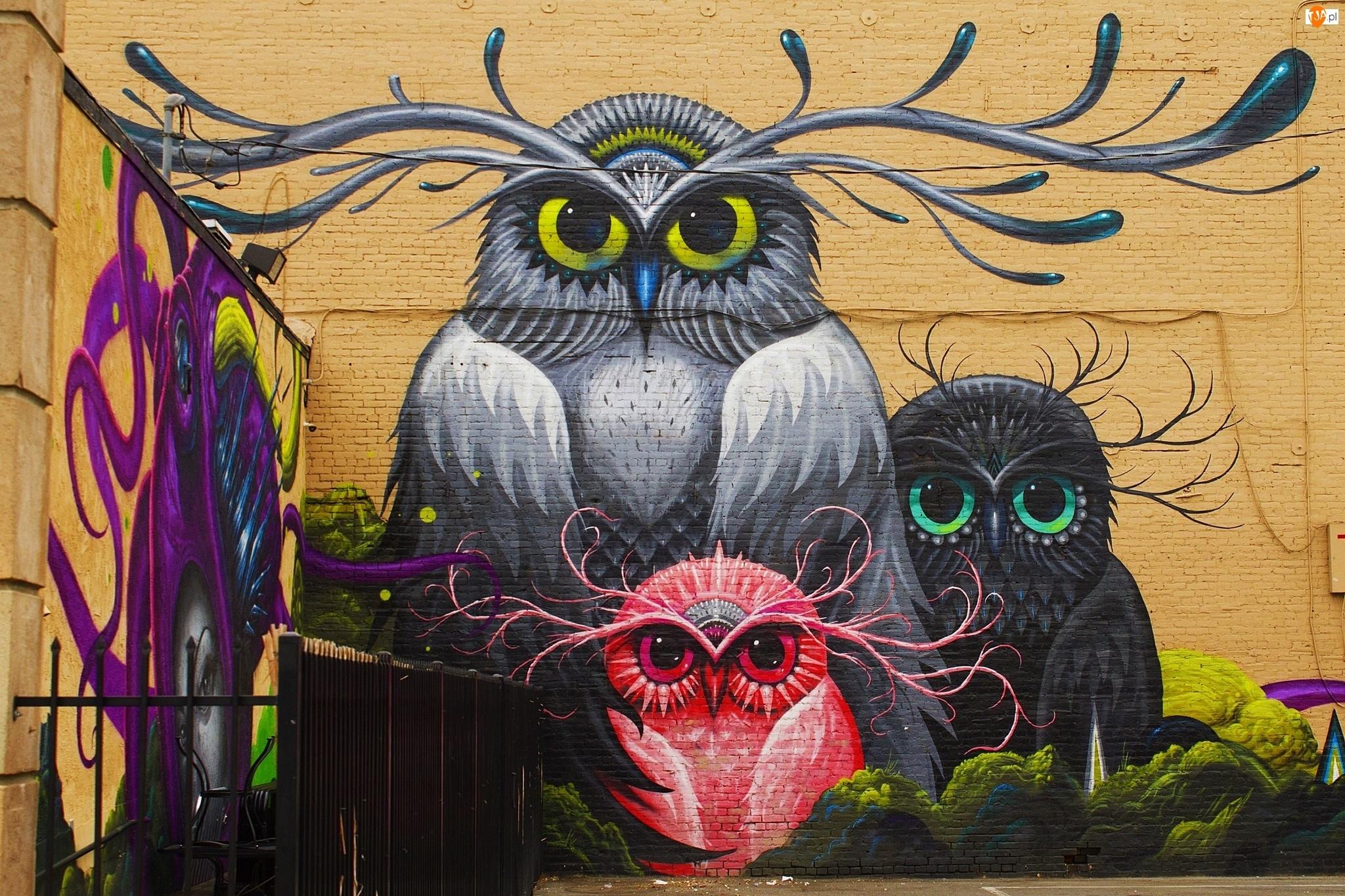 Street art, Kolorowe, Sowy, Mural