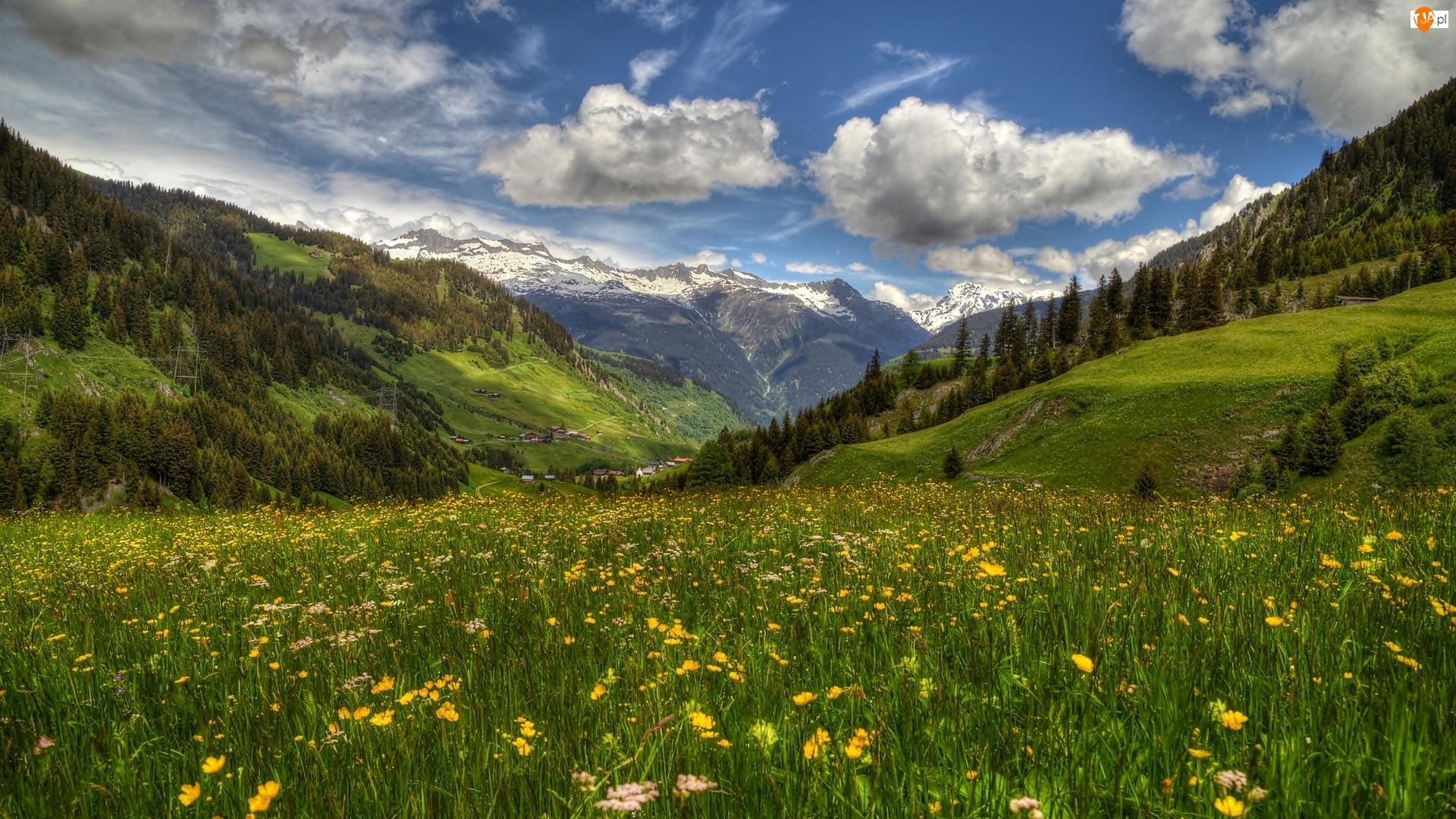 Kwiaty, Dolina, Dolina Surselva, Góry, Szwajcaria, Wiosna, Łąka, Wioska