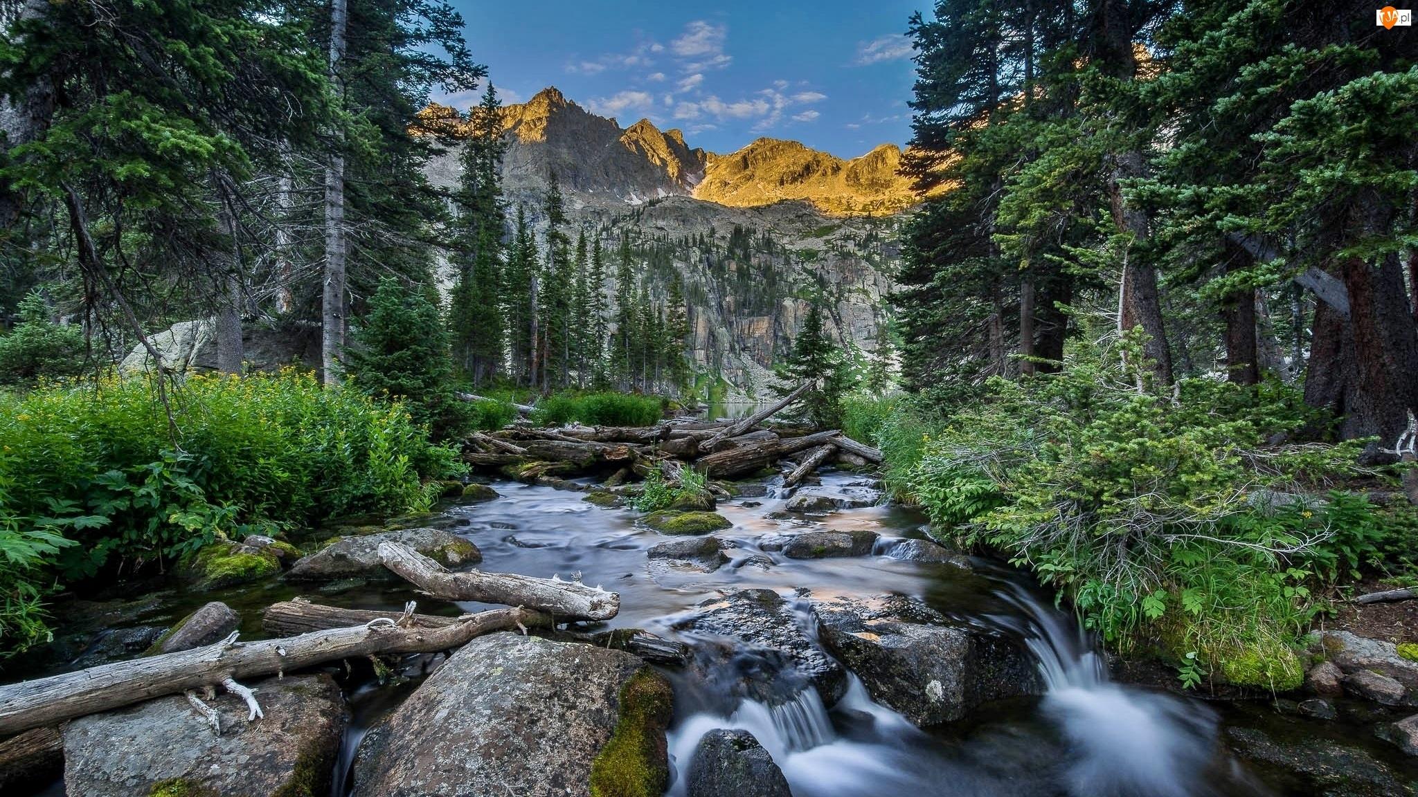 Góry, Drzewa, Stan Kolorado, Rzeczka, Stany Zjednoczone, Kamienie, Indian Peaks Wilderness, Las