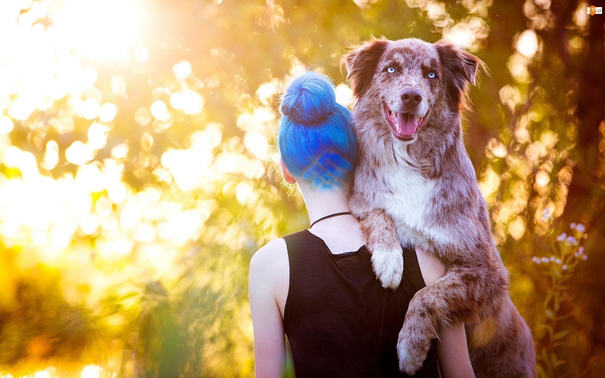 Owczarek australijski, Włosy, Kobieta, Niebieskie