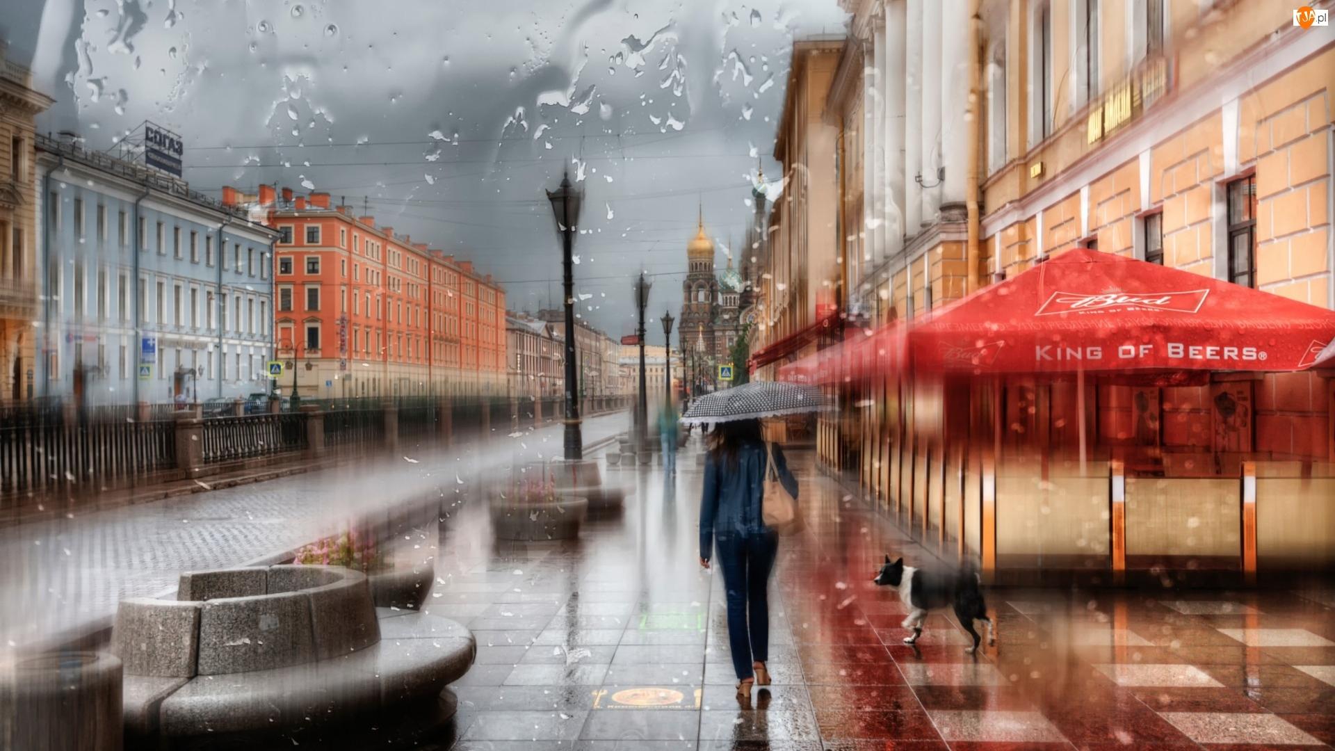 Budynki, Parasol, Deszcz, Pies, Ulica, Kobieta