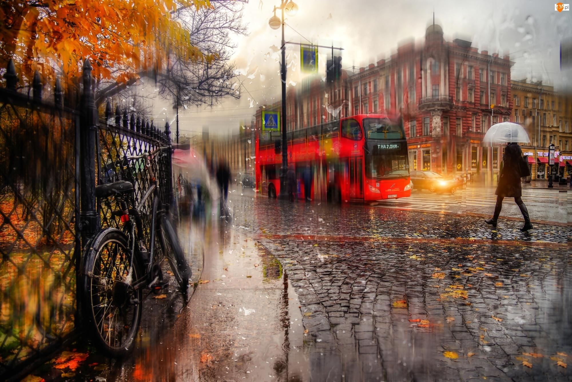 Parasol, Ulica, Petersburg, Domy, Rosja, Deszcz Autobus, Kobieta, Rower