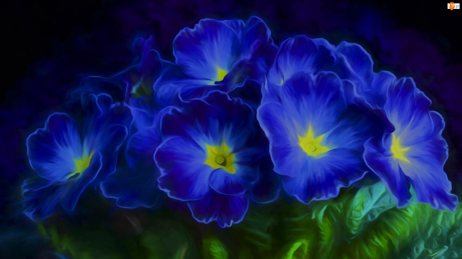 Niebieskie, Grafika 2D, Kwiaty, Prymulki