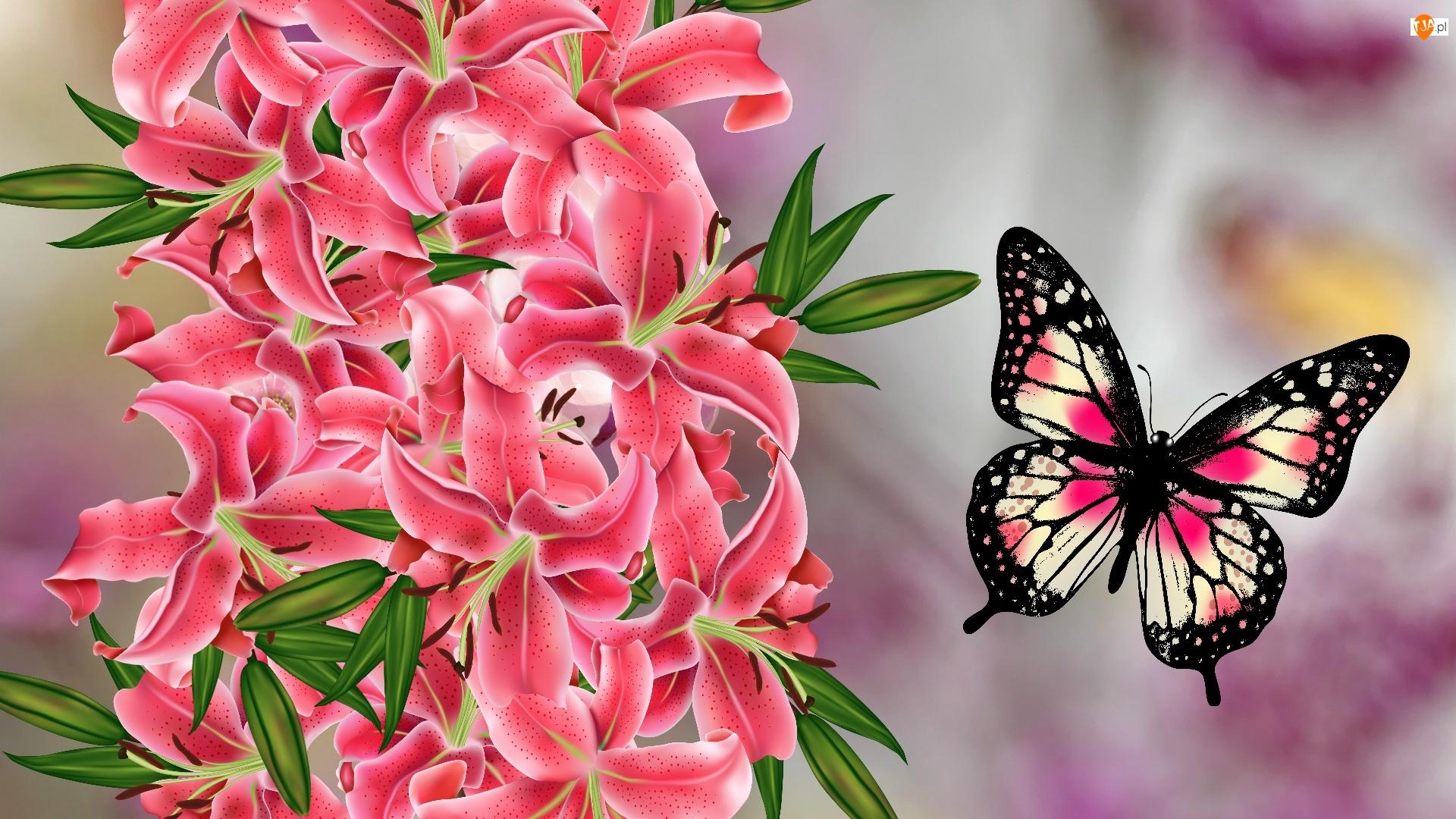 Grafika, Kwiaty, Motyl