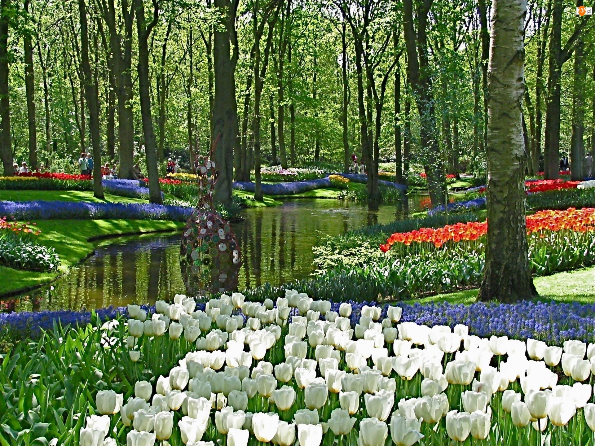 Rzeczka, Kwiatowe, Wiosna, Spacerowicze, Park, Dywany