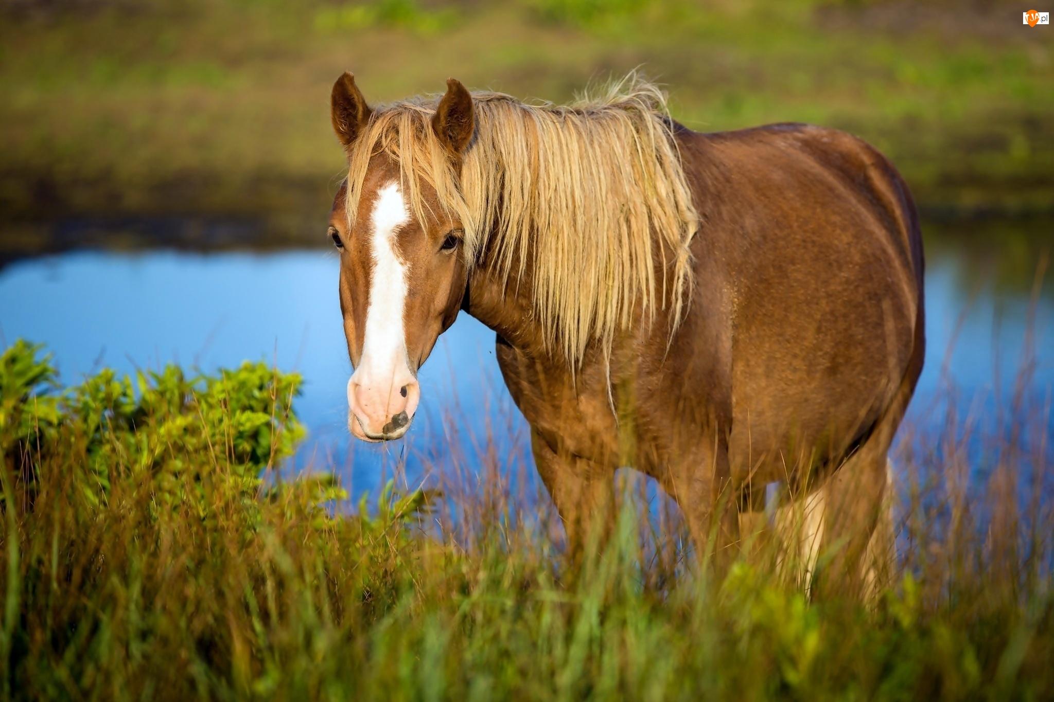 Koń, Trawa