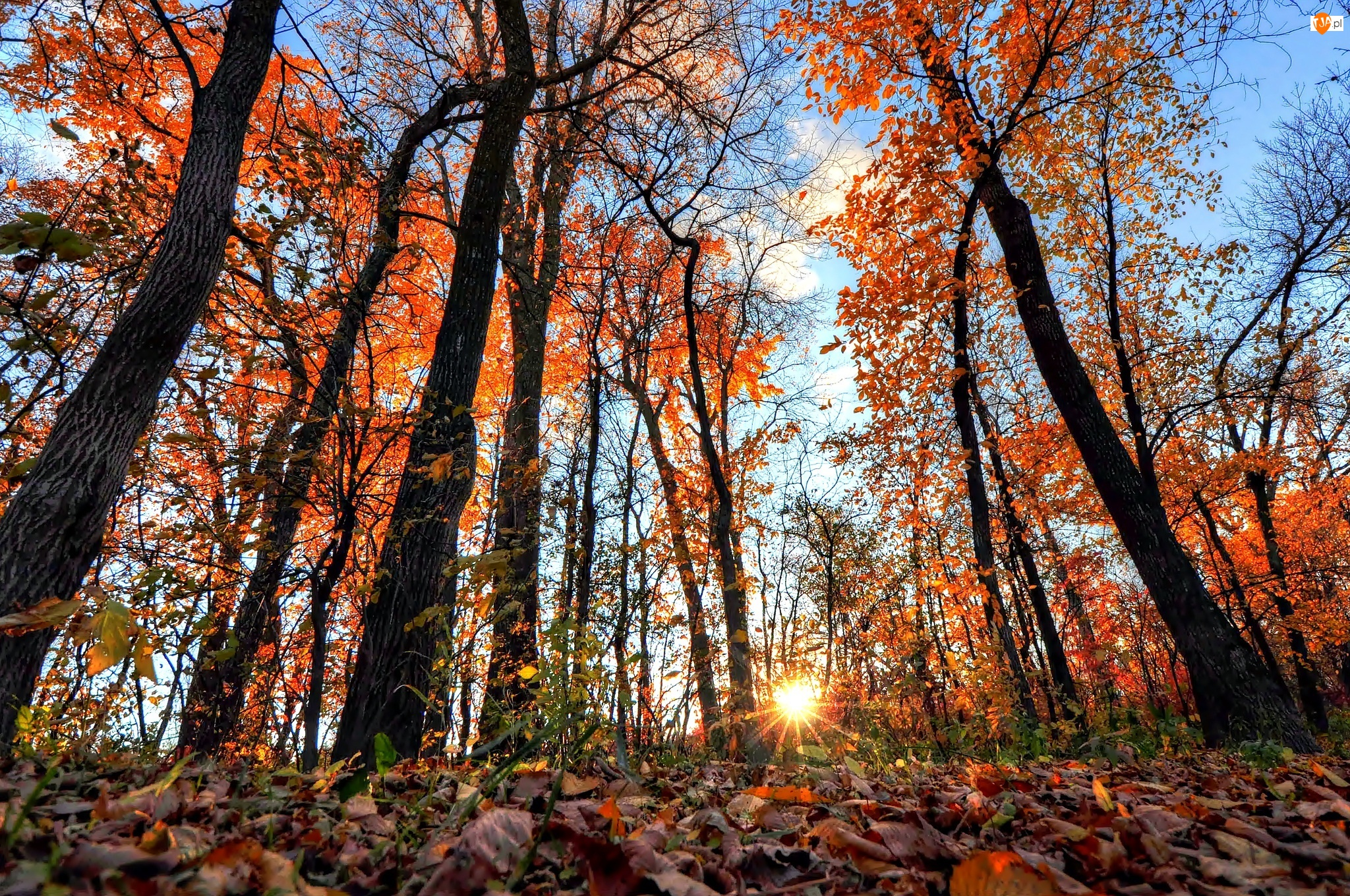 Słońce, Jesień, Liście, Las, Promienie