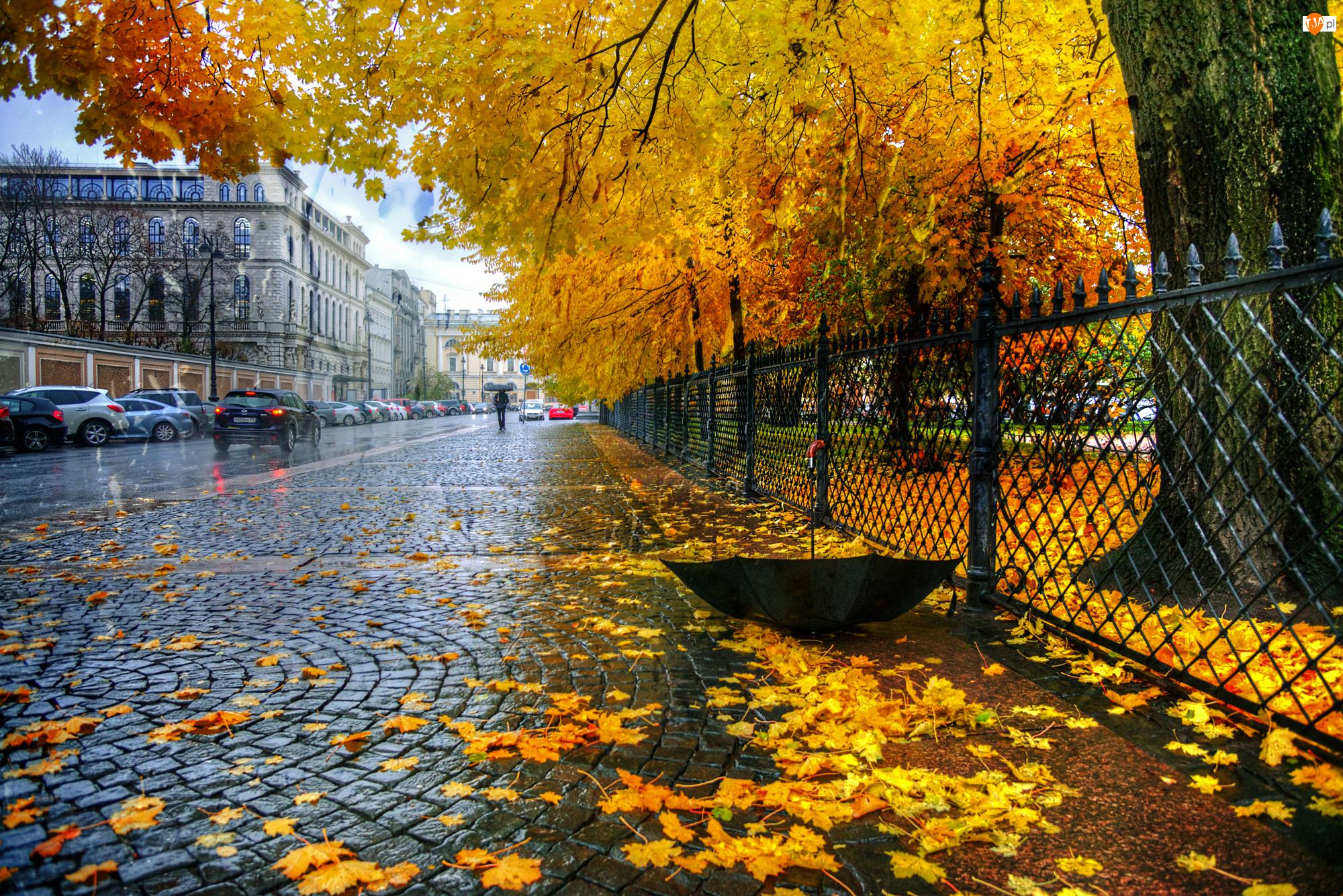 Parasol, Budynki, Ulica, Drzewa, Jesień, Liście, Deszcz, Samochody