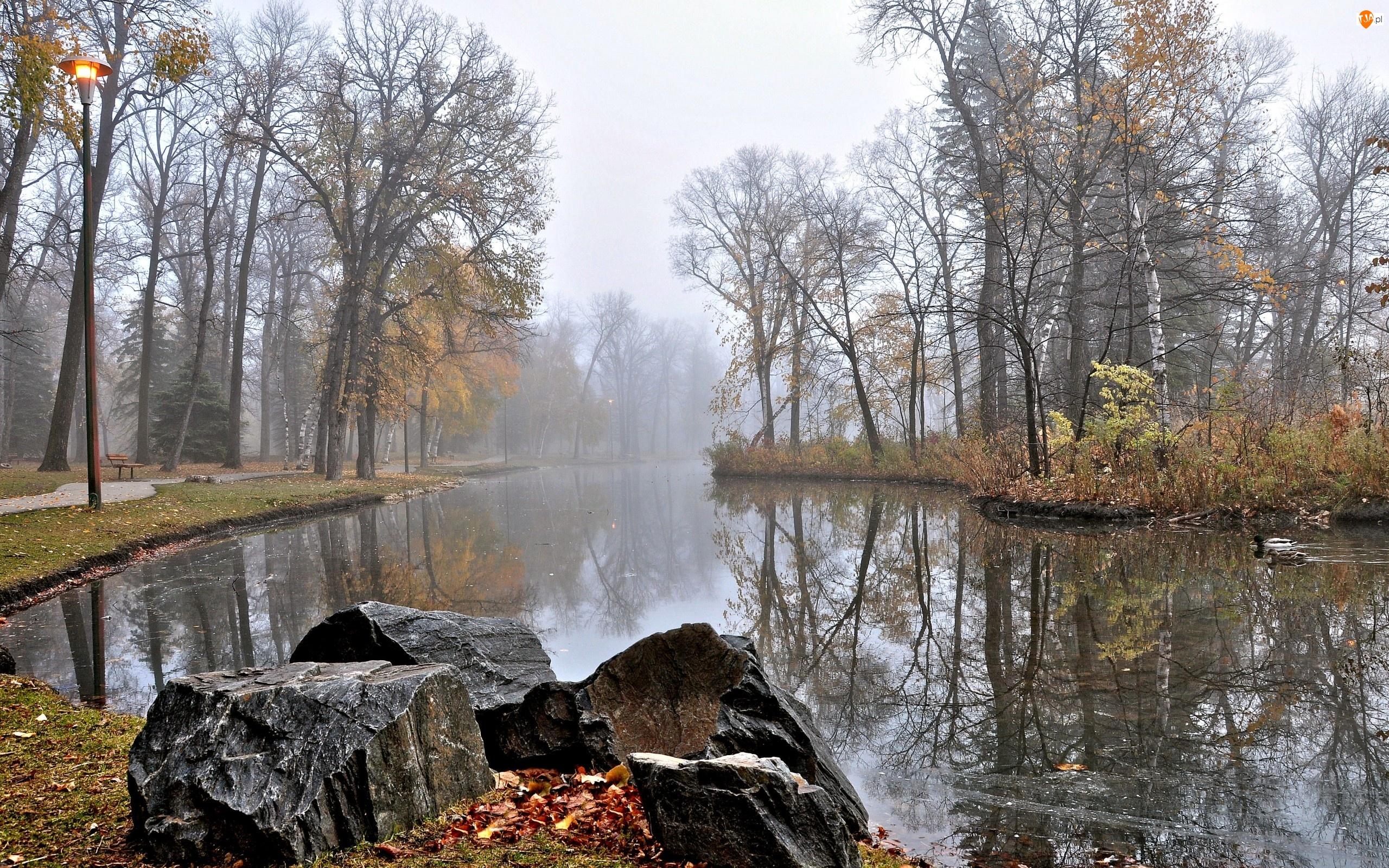 Kamienie, Mgła, Rzeka, Jesień, Kaczki, Park