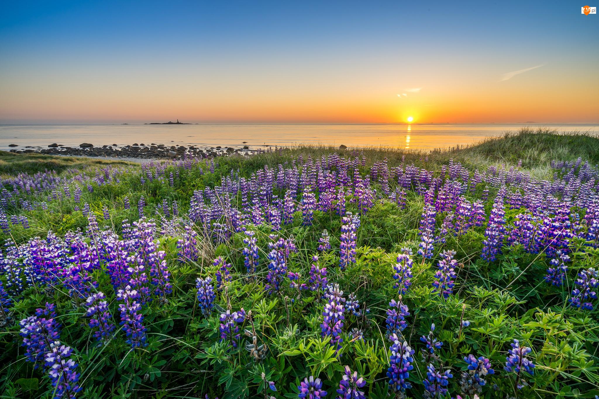 Łubin, Norwegia, Morze, Rogaland, Zachód słońca