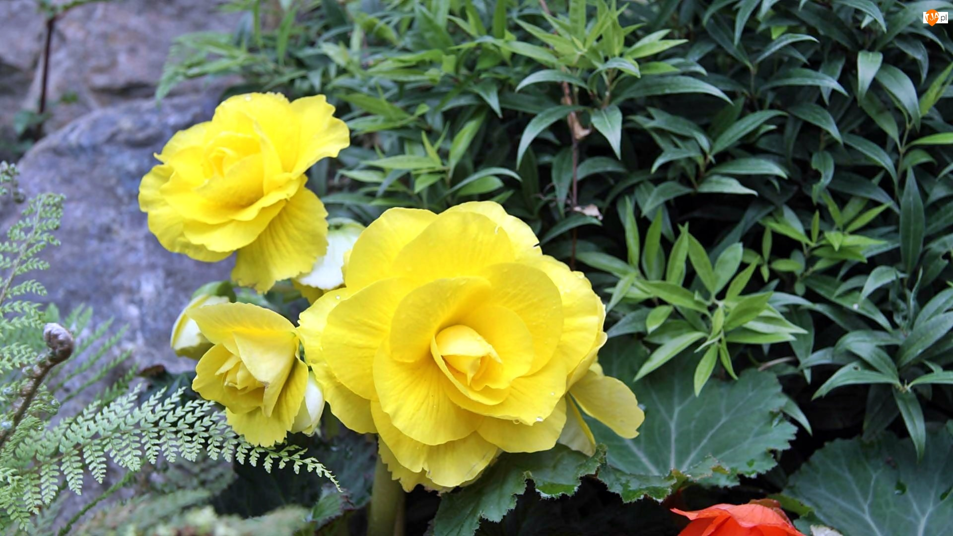 Kwiaty, Piękne, Żółte