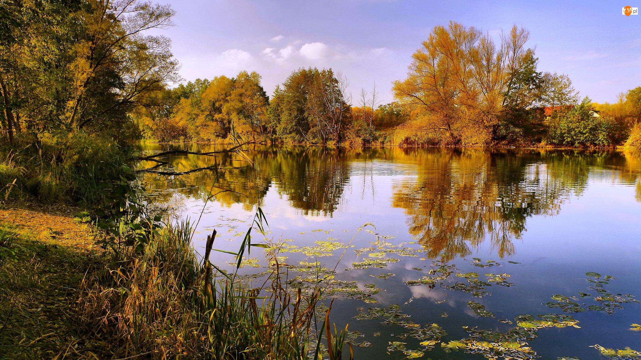 Odbicie, Jesień, Drzewa, Jezioro, Trzciny