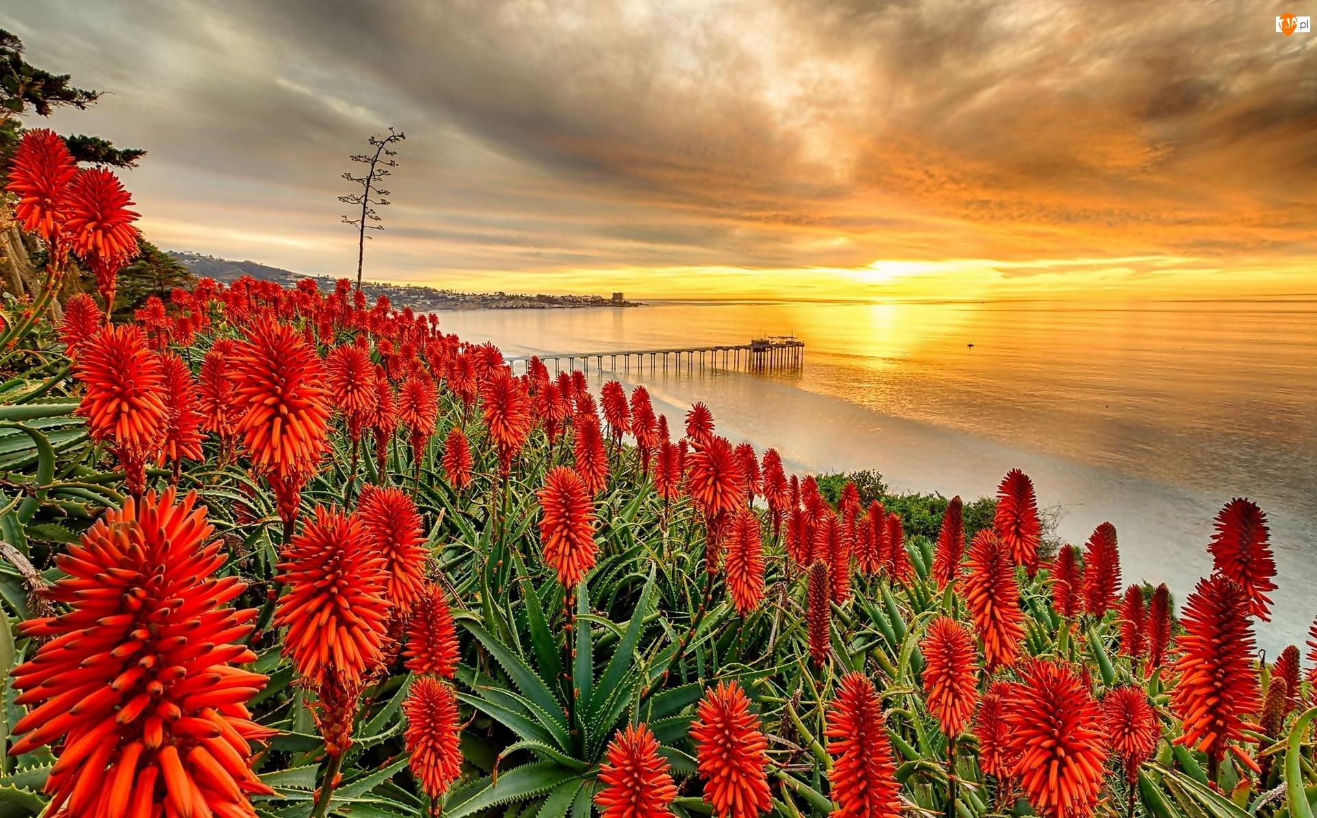 Aloes, Molo, Stany Zjednoczone, Zachód słońca, San Diego, Morze