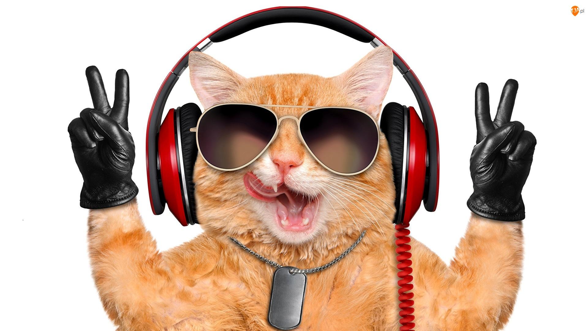 Kot, Rękawice, Słuchawki, Okulary