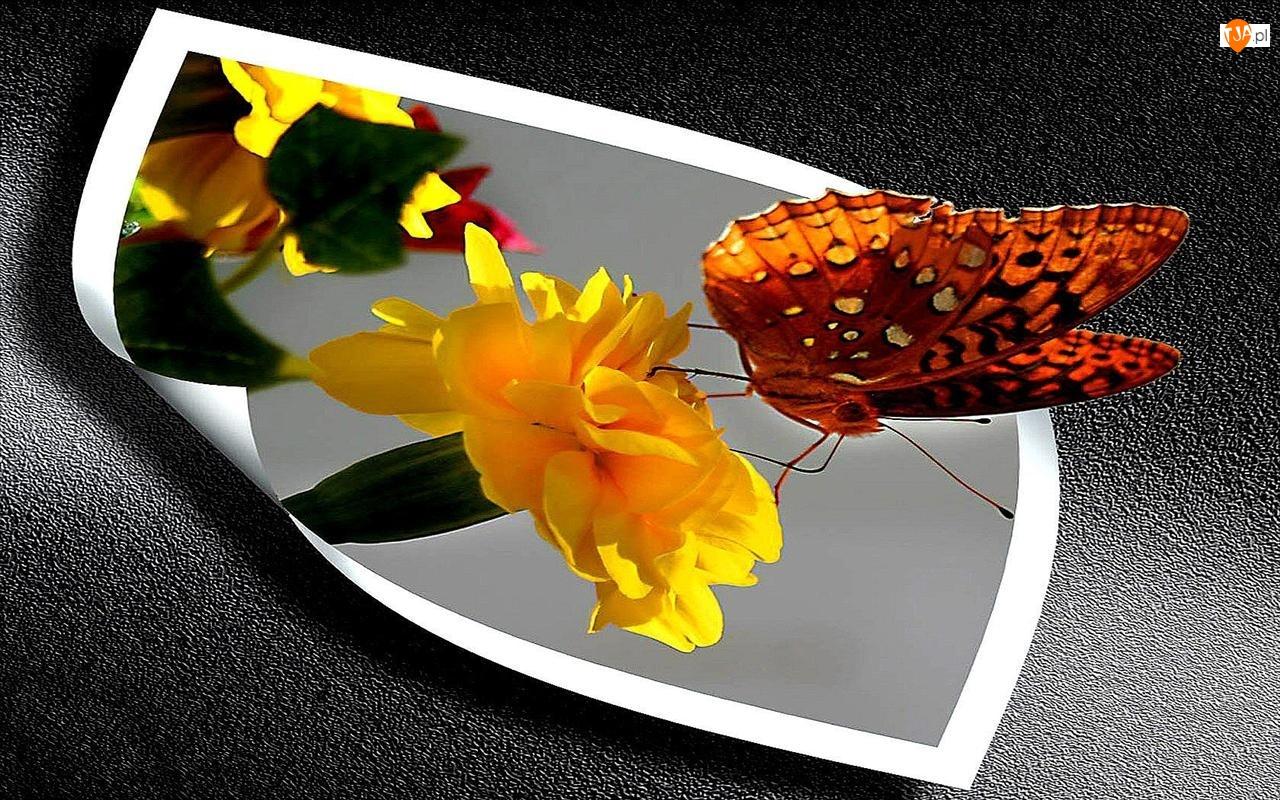 4D, Motyl, Kwiatek