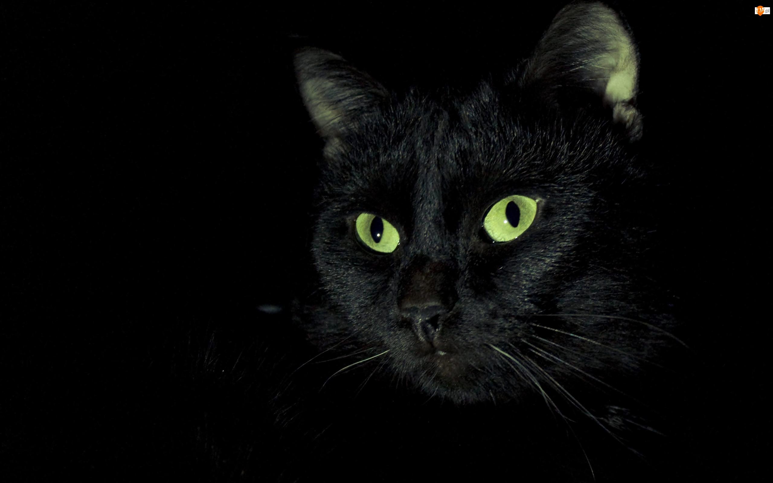 Oczy Czarny Kot