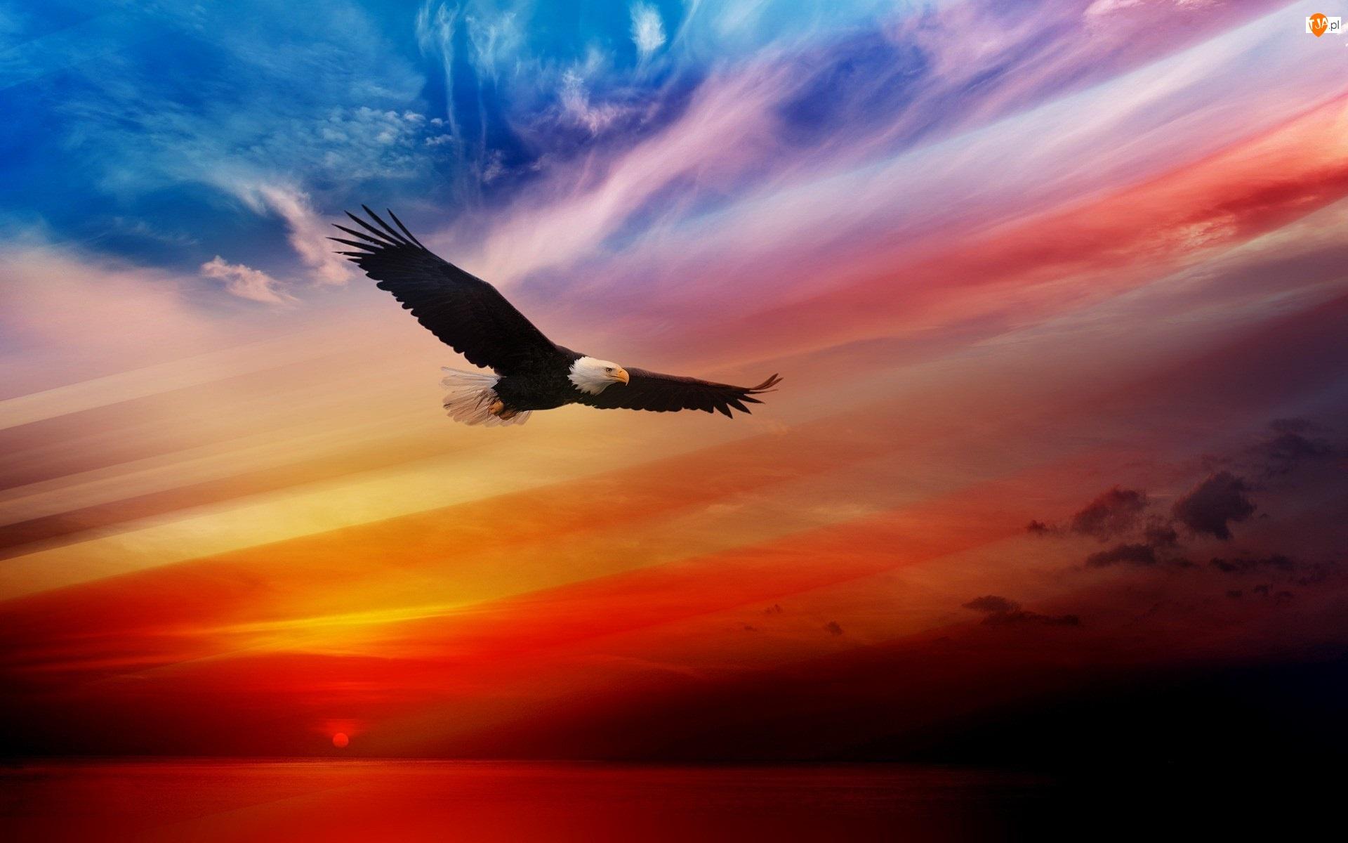 Zachód Słońca, Orzeł, Bielik Amerykański
