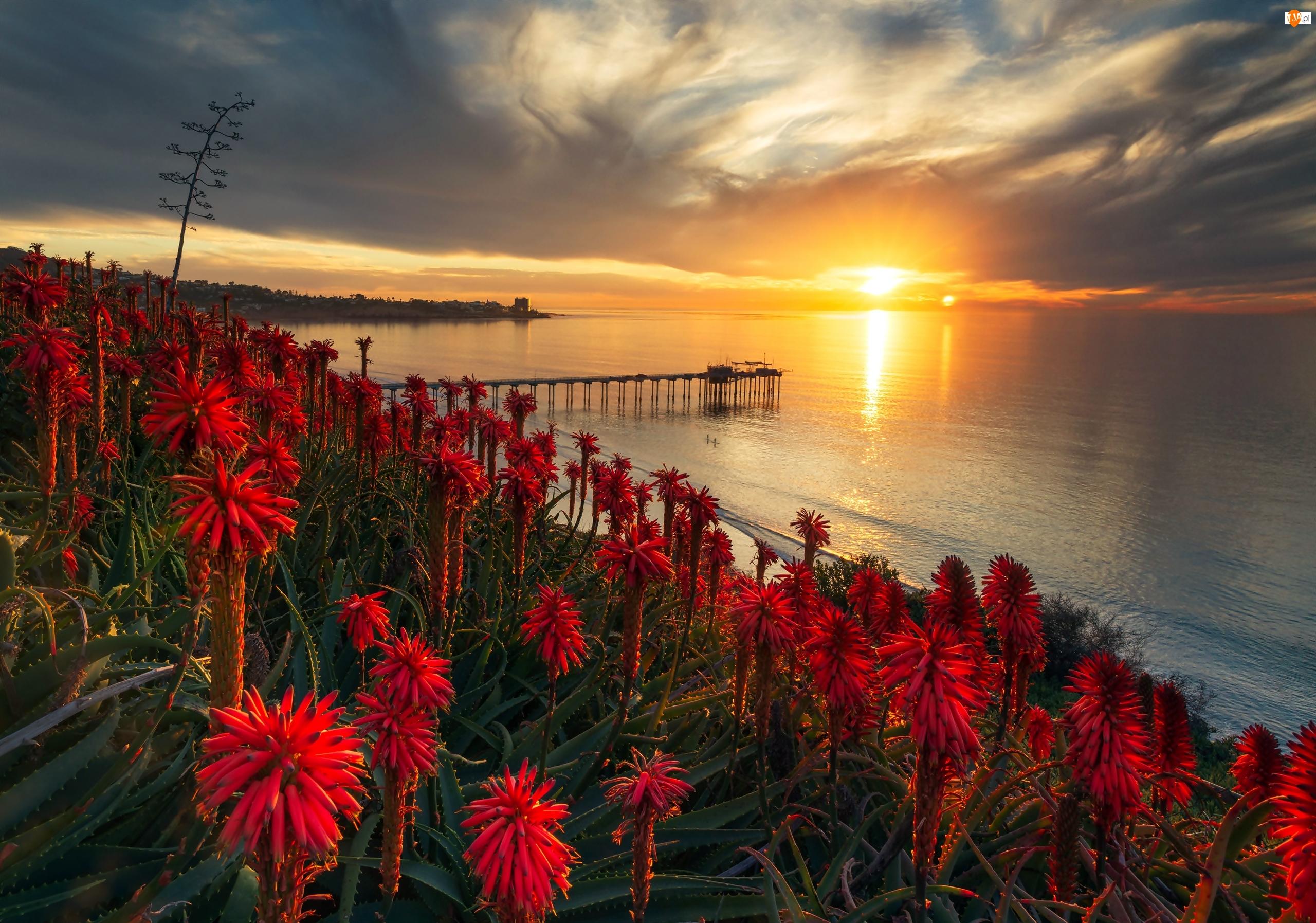 Ocean Spokojny, Molo, Stany Zjednoczone, Aloes, San Diego, Zachód słońca