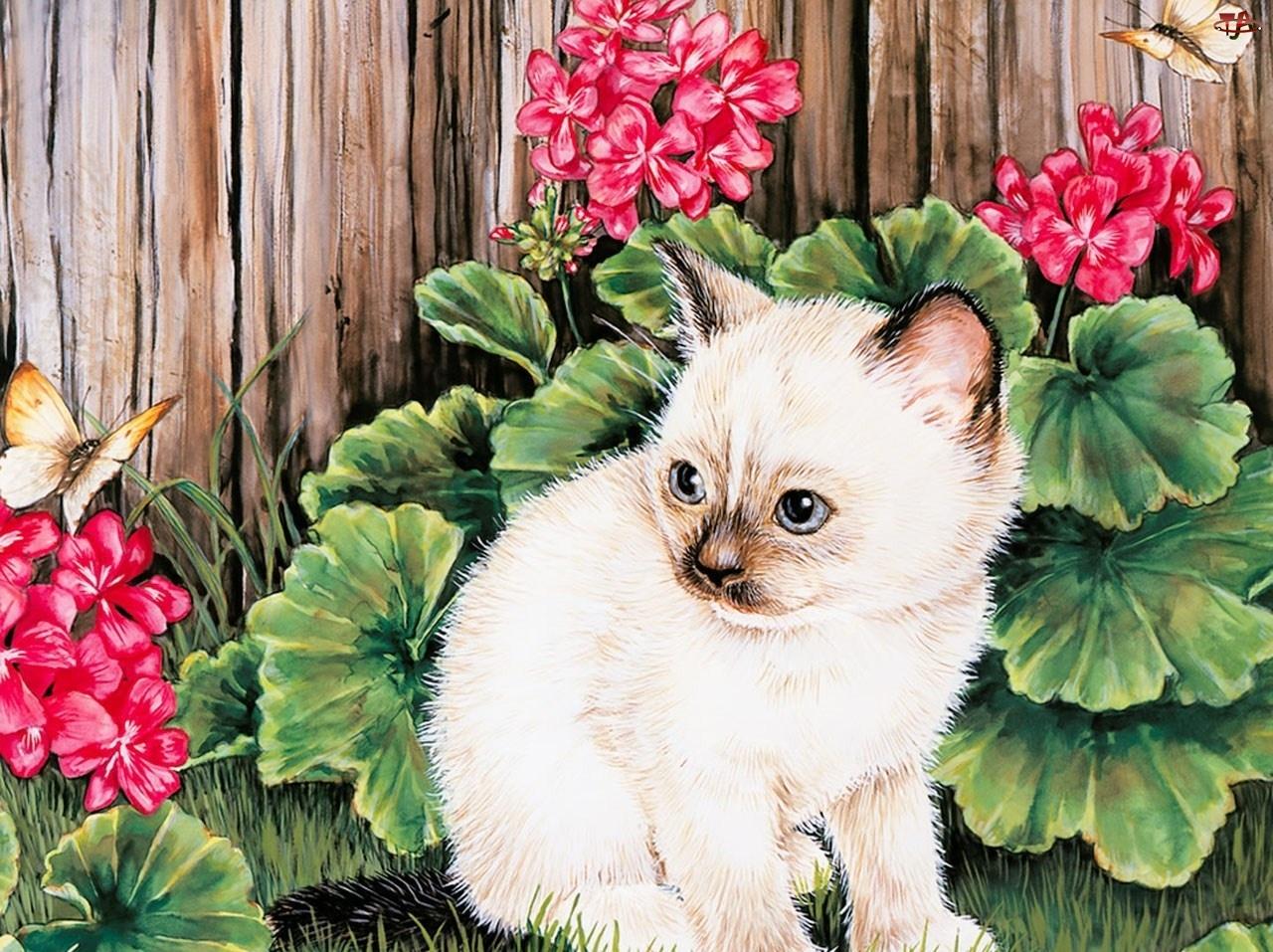 Płotek, Kotek, Kwiaty