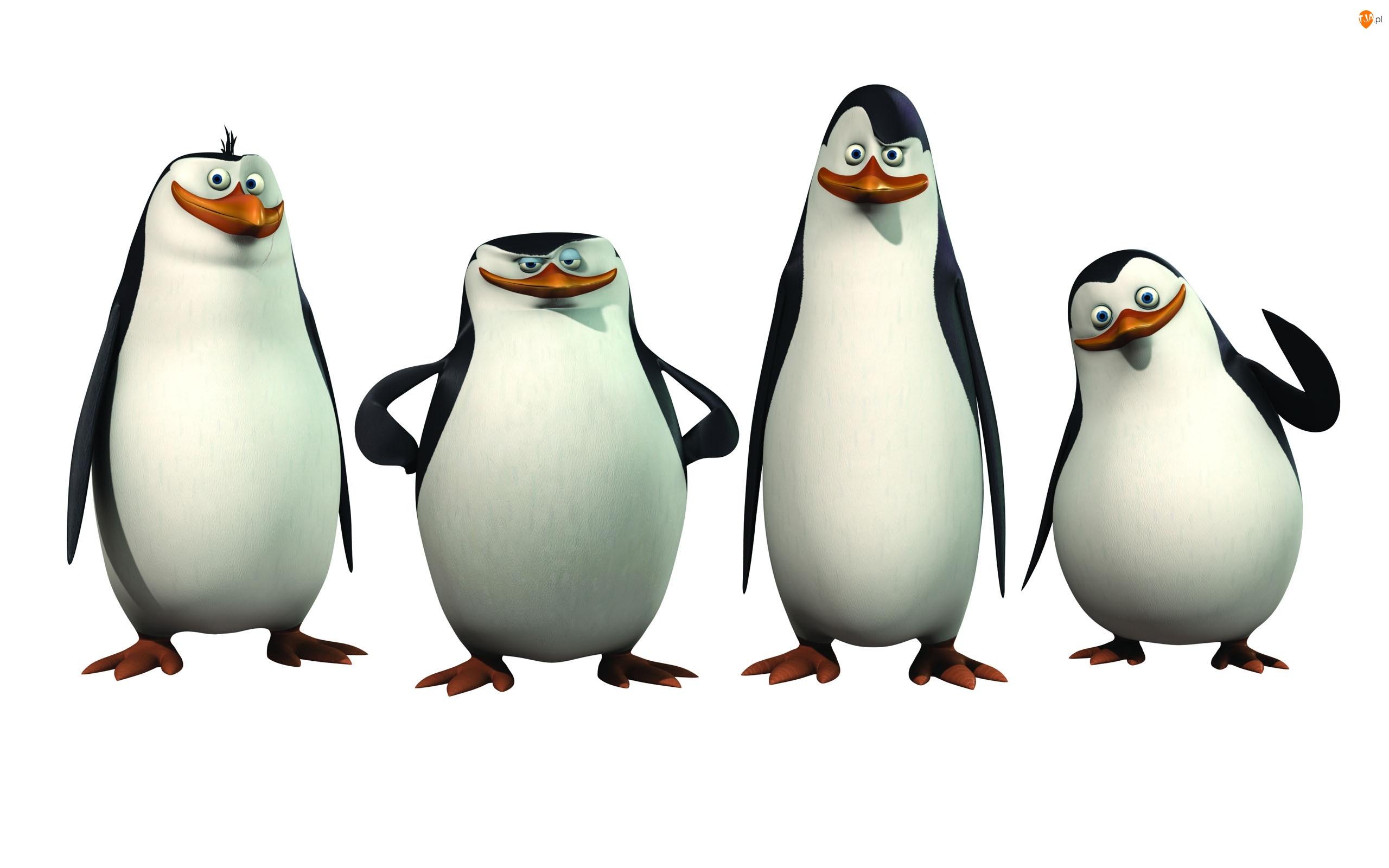 The Penguins of Madagascar, Ptaki, Pingwiny z Madagaskaru