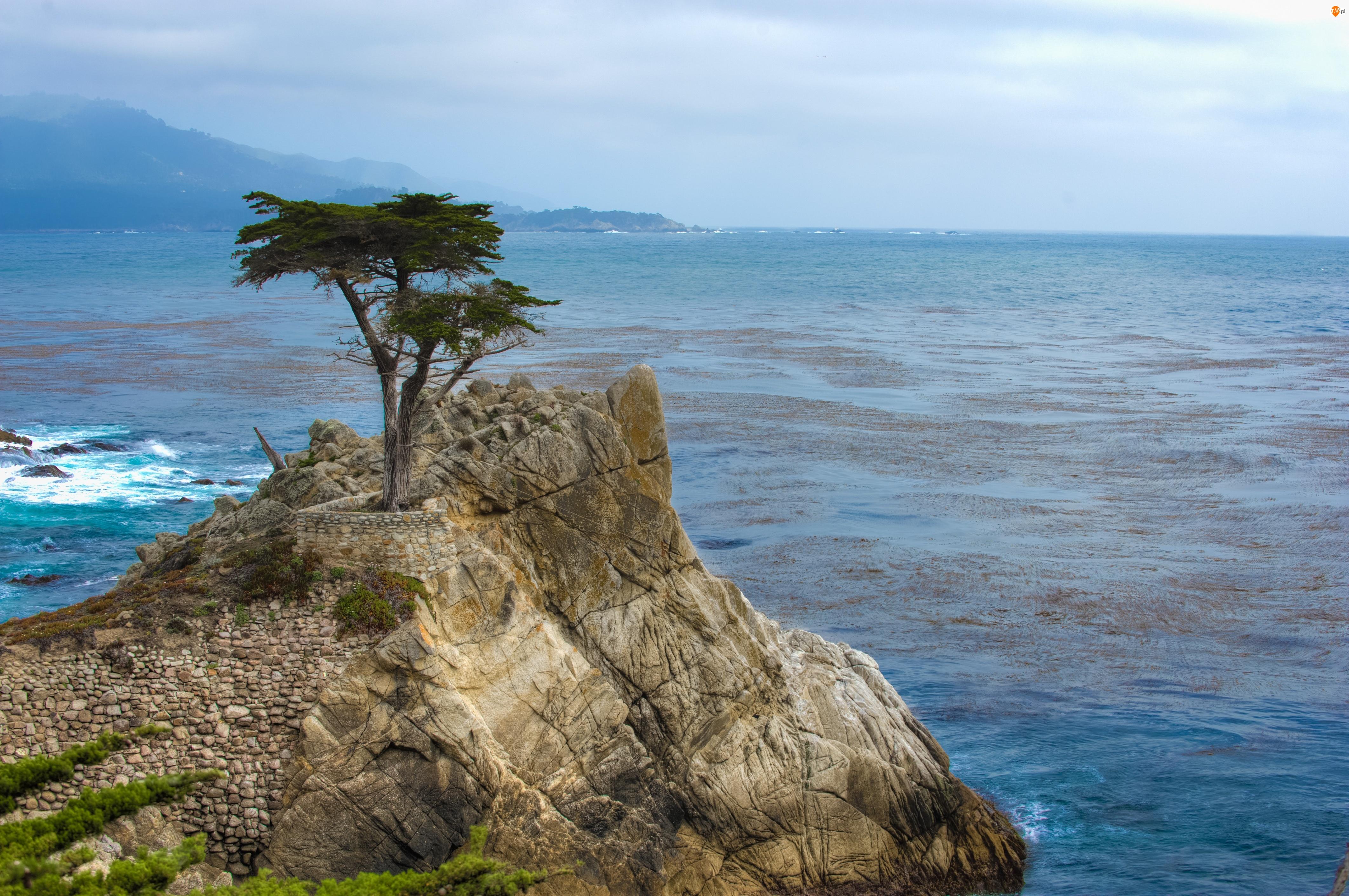 Drzewo, Morze, Skała