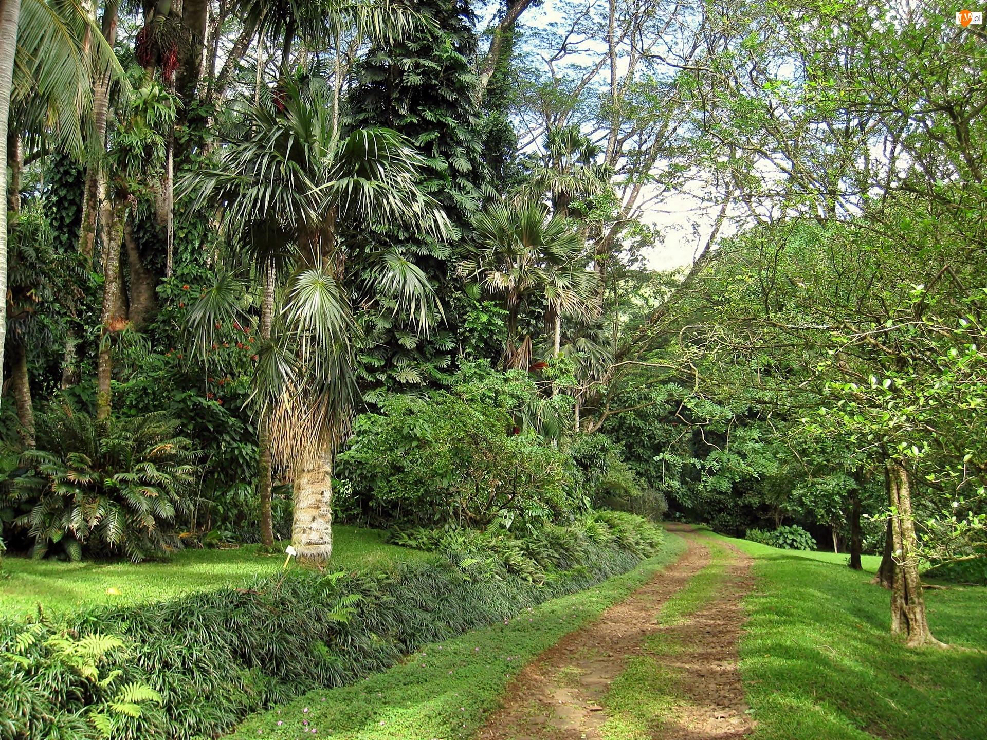 Park, Ameryka północna, Hawaje, Droga, Lato