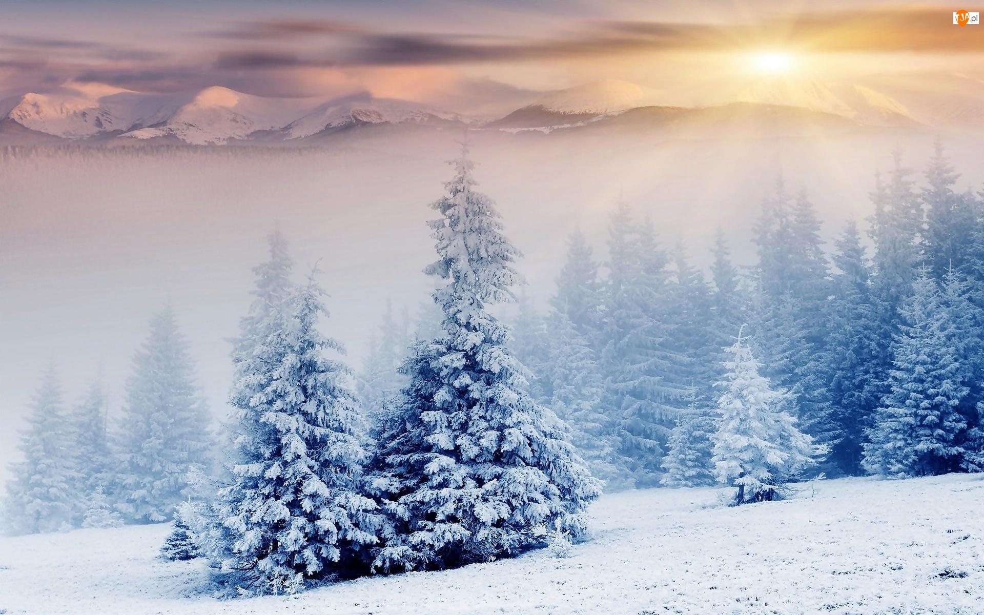 Słońca, Las, Zima, Mgła, Wschód, Góry